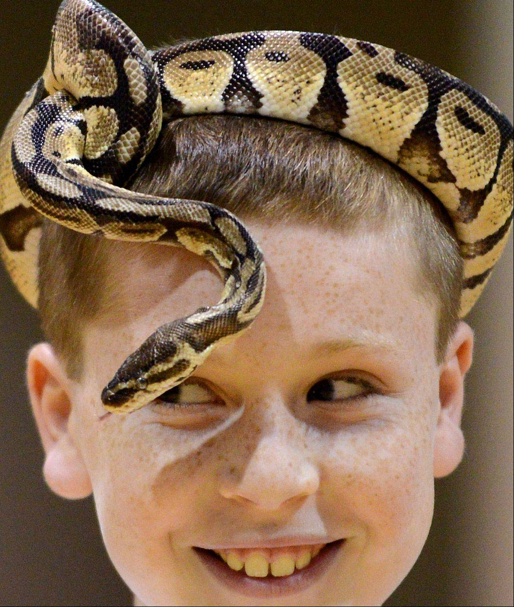 5th-grader Sam Hoying keeps a close eye on the movements of his python hat during a visit from Dave Dinaso's Traveling World of Reptiles at St. Peter School in Geneva Tuesday.