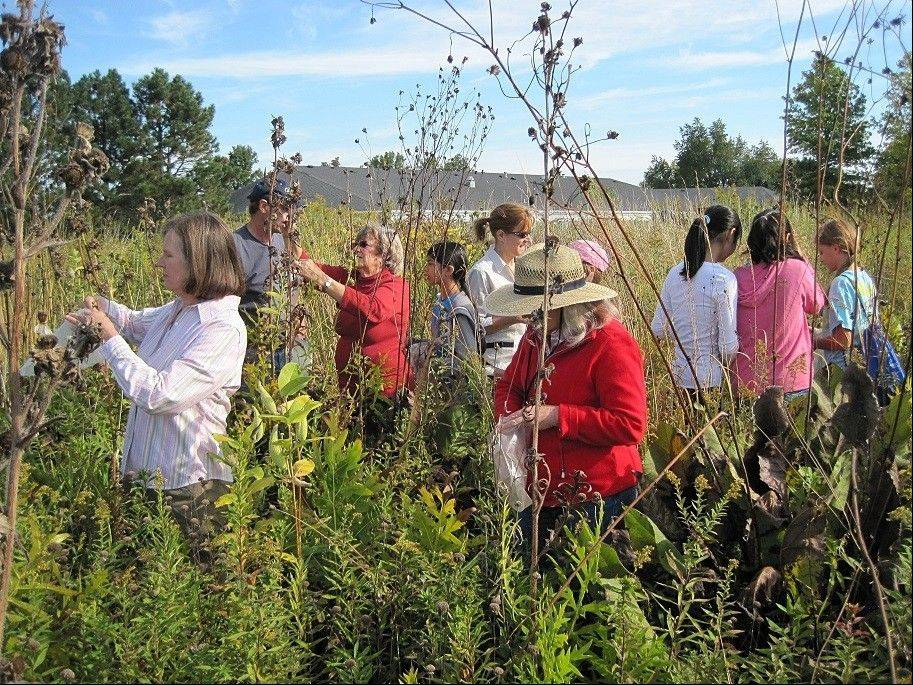 Citizens for Conservation will hosts Make A Difference Day activities from 9-11 a.m. on Saturday, Oct. 26. Come help collect or clean the seed of native plants. For information, visit citizensforconservation.org.