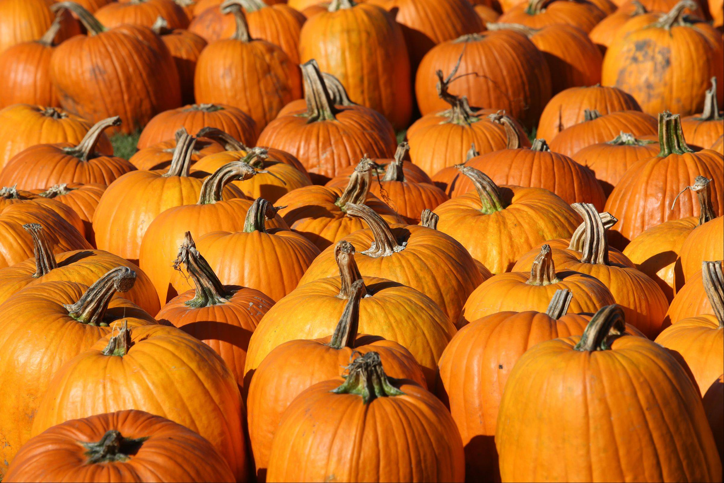 A large selection of pumpkins in all sizes and colors is available at Goebbert's Pumpkin Patch in Hampshire.