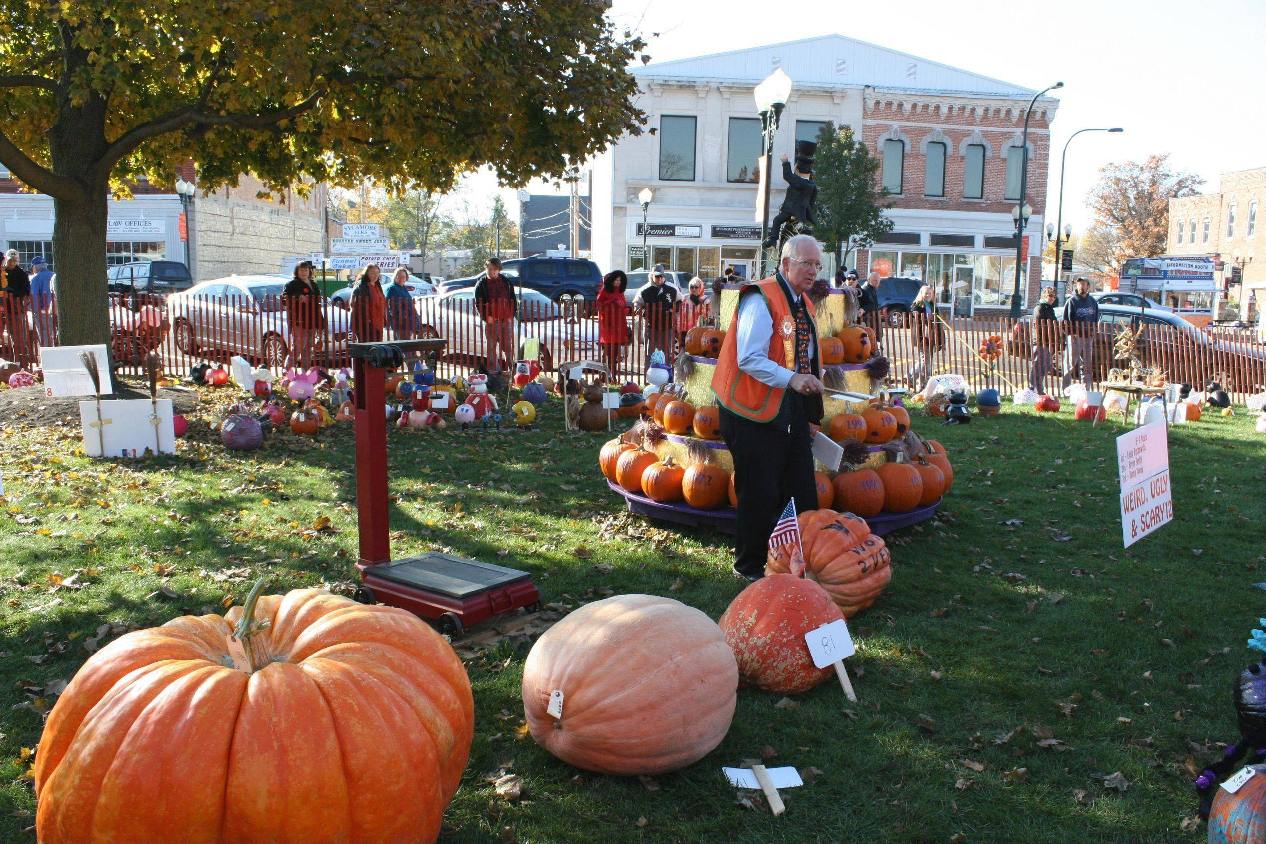 A display of pumpkins is part of the fun at the annual Sycamore Pumpkin Festival.