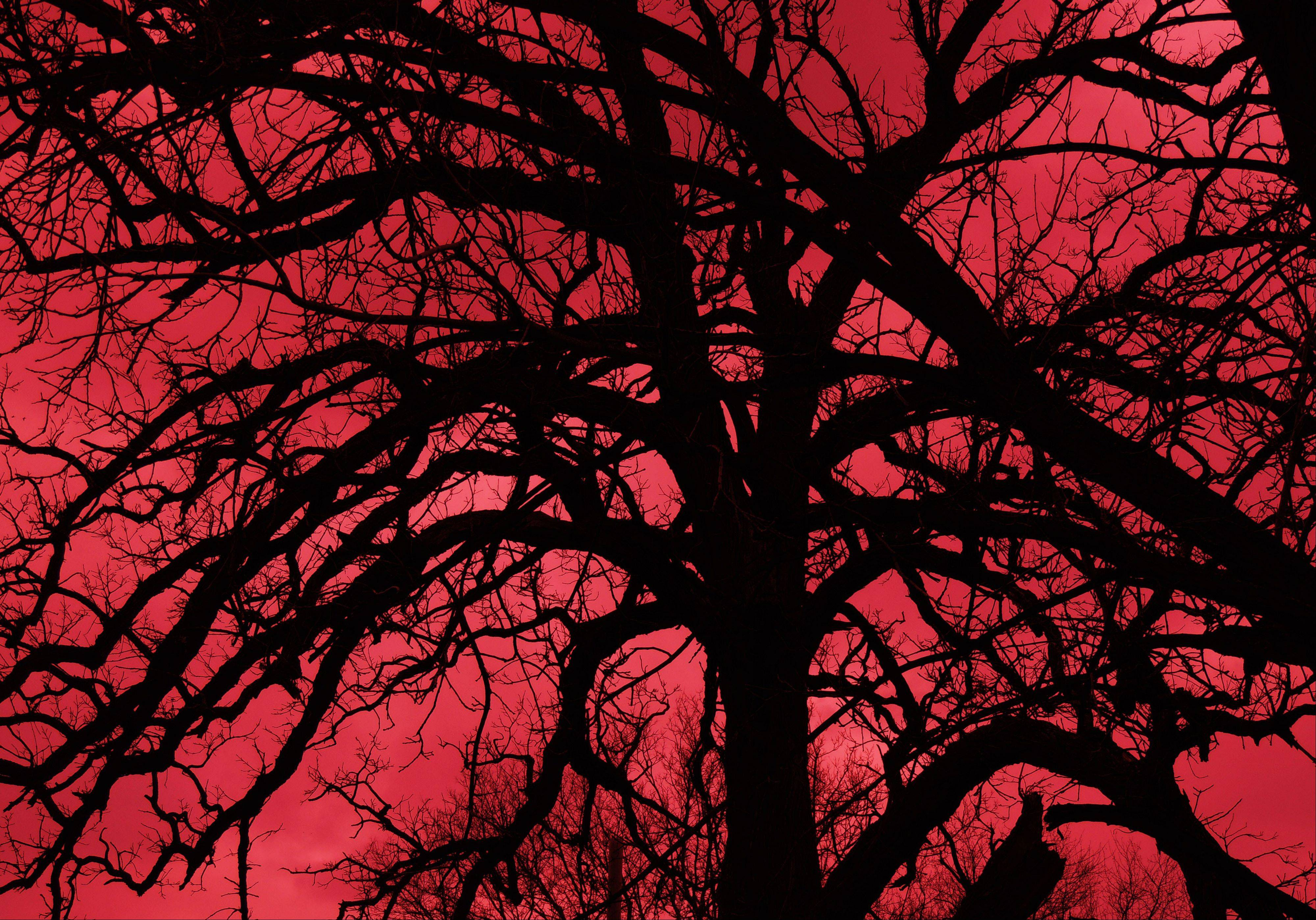 "I took this photo of an oldbare tree out in Burlington. I thought it was spooky and called it ""Children of the Night"""