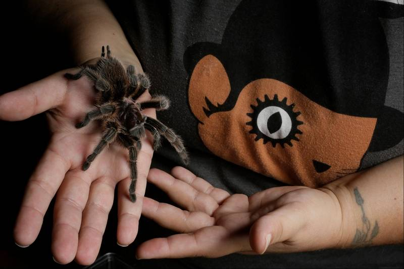 Hairy, scary tarantulas don't spook loyal owners