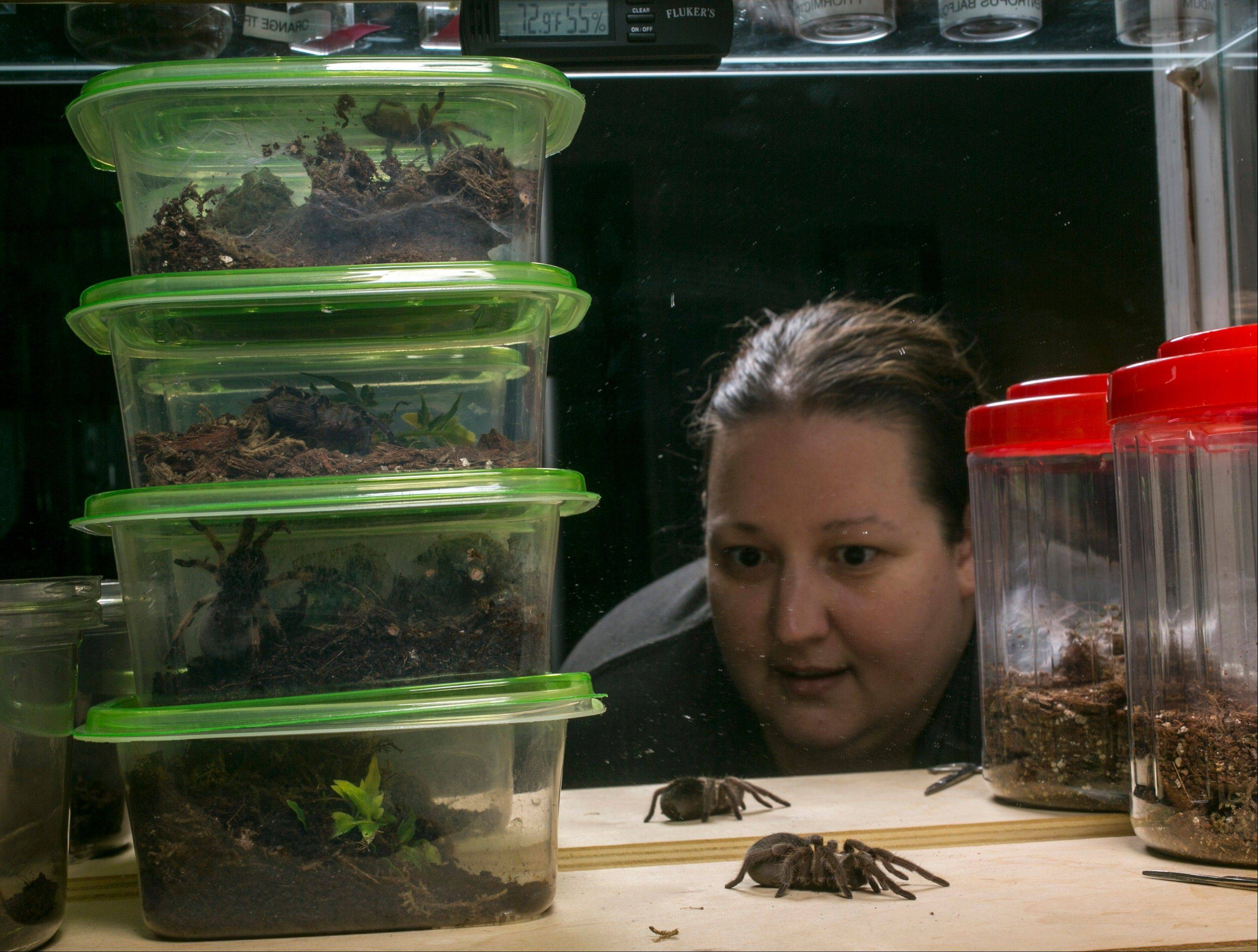 Dee Reynolds cares for one of her 50 tarantulas at her home in Los Angeles.