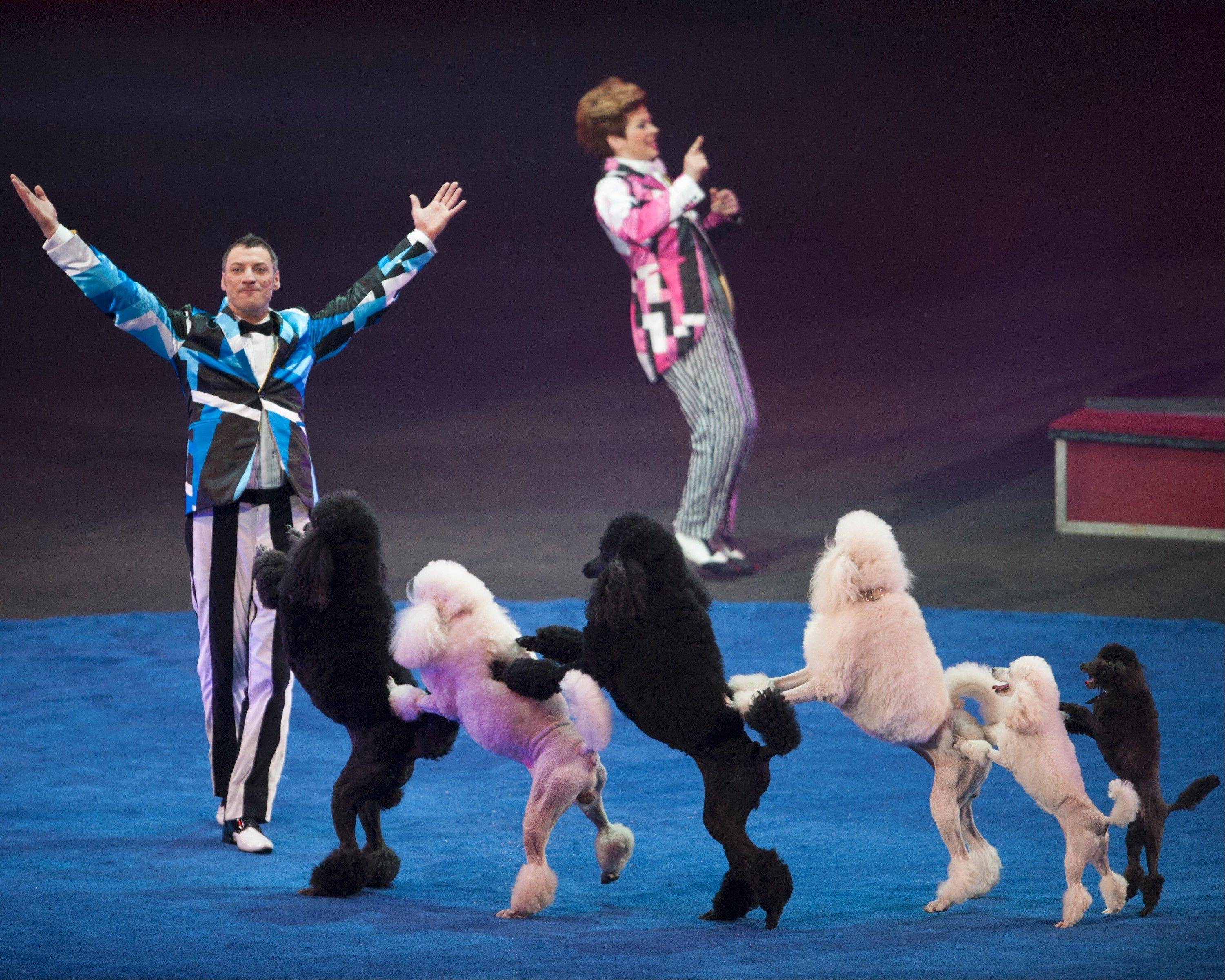"Alex and Irina Emelin of Russia with their black-and-white poodles are in the Ringling Bros. and Barnum & Bailey Circus show ""Built to Amaze!"""