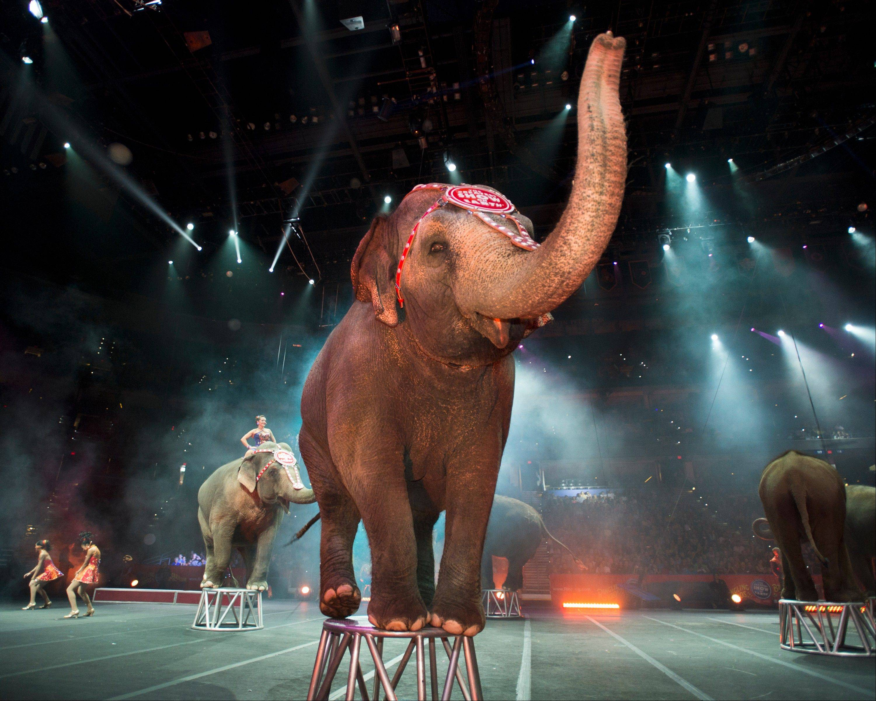 "Elephants are a part of the Ringling Bros. and Barnum & Bailey Circus show ""Built to Amaze!"""