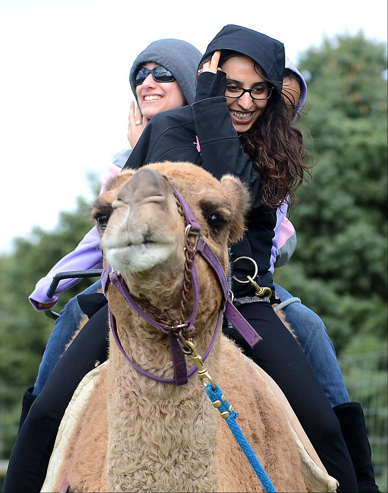 Saniyah Shakeel, front, of Schaumburg, and Jessica Cairo, left, of Carol Stream, smile after Goober the camel bucks a little during a ride at the Goebbert's Pumpkin Patch Fall Festival in Hampshire Monday. They were riding with Dana Mestey, 11, of Algonquin, who was smooshed in the middle.
