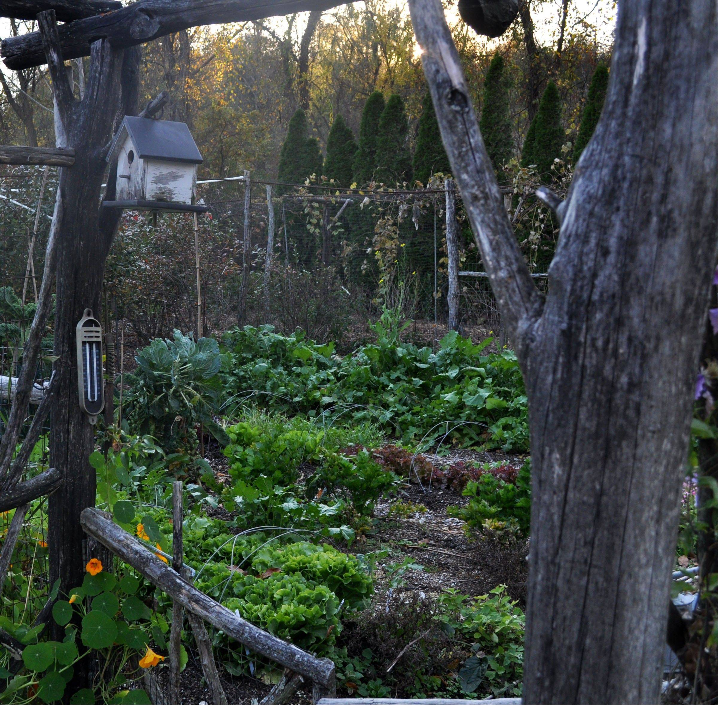 A vegetable garden for autumn can include endive, turnips, lettuce and Brussels sprouts. Just because summer's gone and there's frost in the air doesn't mean your garden has to be a scene of tawny colors and limp leaves.