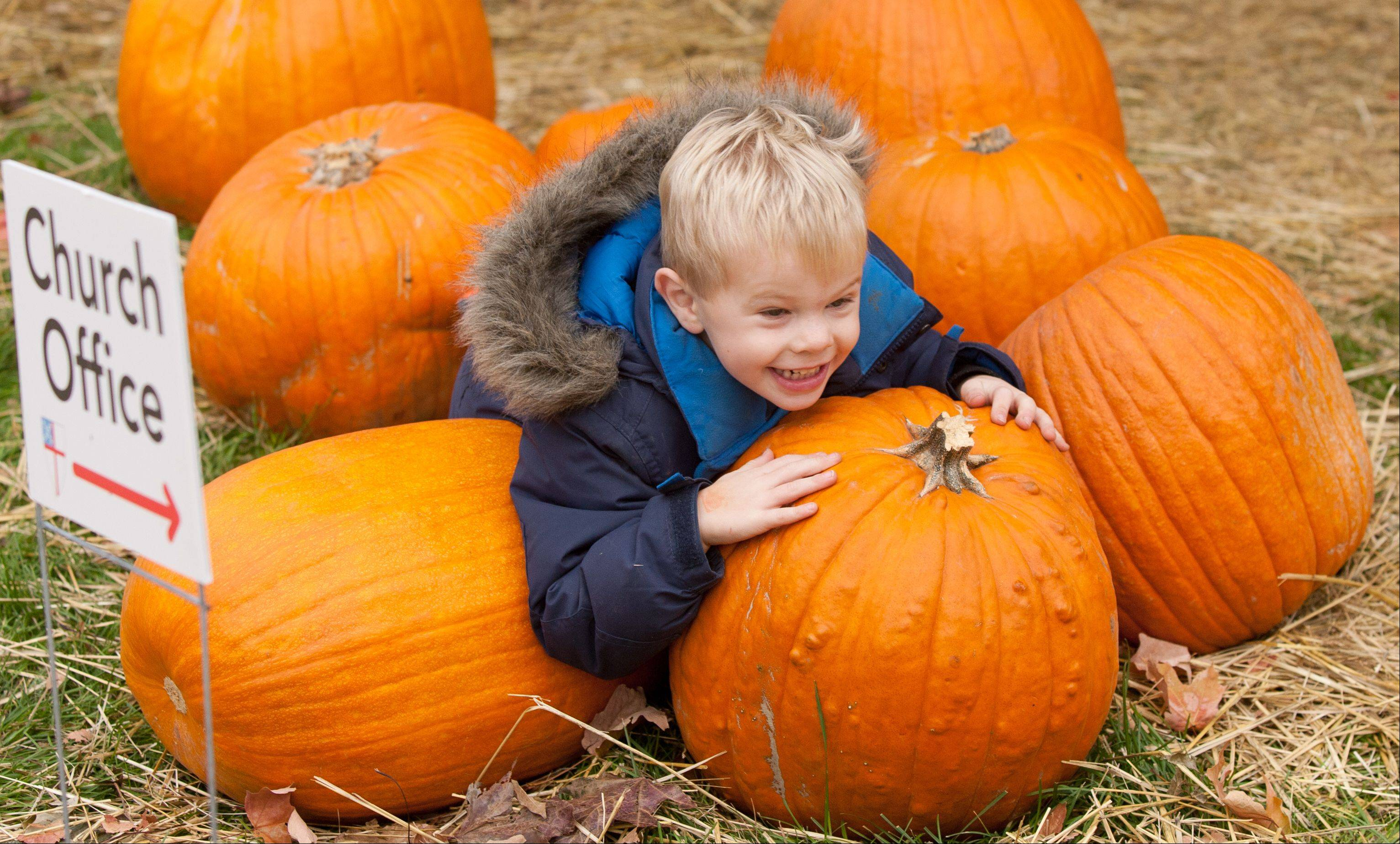 "St. Mark's Episcopal Church preschooler Elliot Dupuy plays in a pumpkin patch Wednesday on the church grounds in Glen Ellyn. The annual pumpkin sale raises money to fight homelessness and the patch also serves as an extension of indoor classrooms. ""When we come out here, sometimes we bring our journals and draw what we see in the pumpkin patch,"" preschool teacher Beth Figler said. ""Then we go back inside to write and talk about our experiences."""