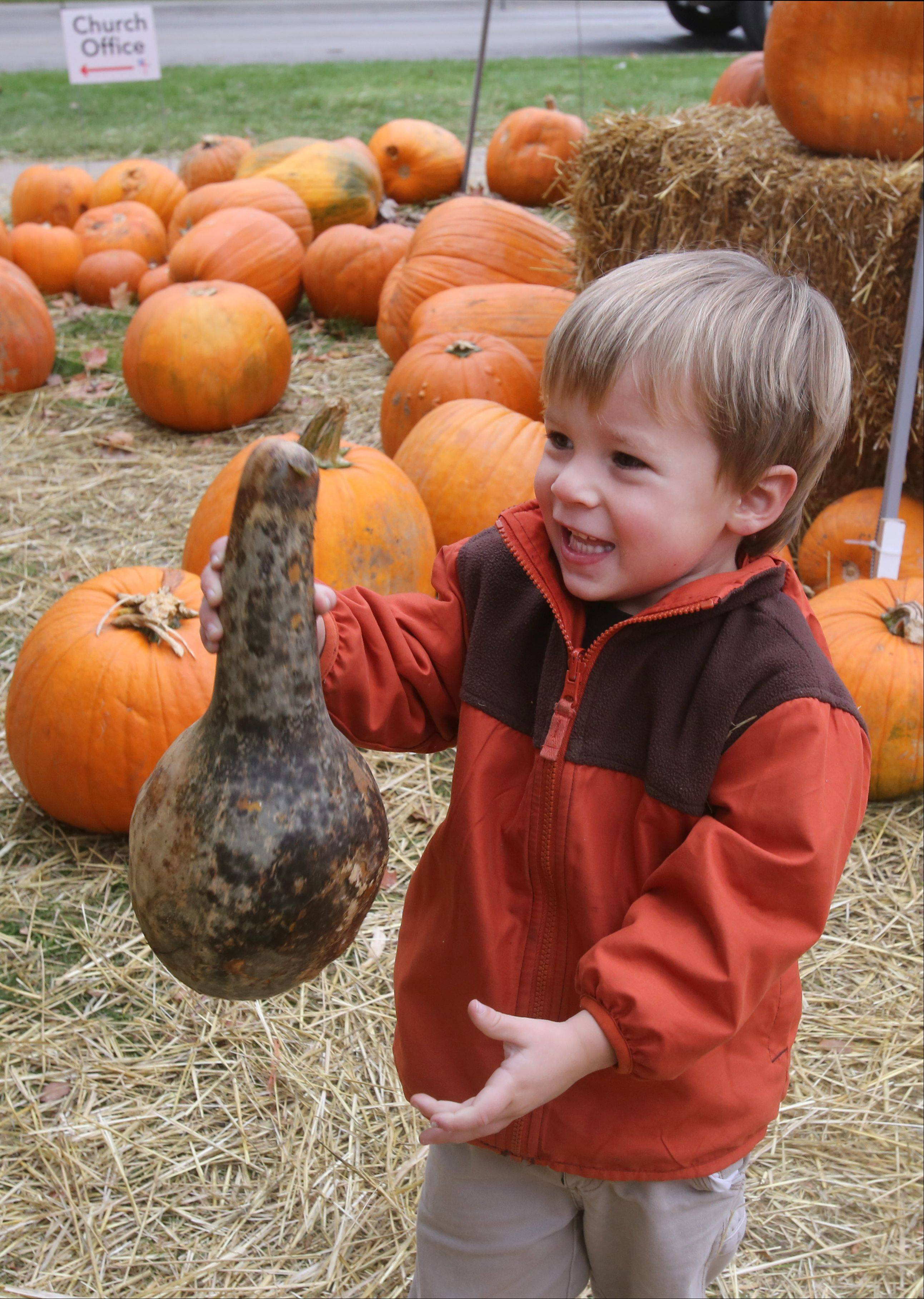 St. Mark's Episcopal Church preschooler Soren Alcorn plays in a pumpkin patch on the church's grounds in Glen Ellyn. The annual pumpkin sale helps raise money to fight homelessness.