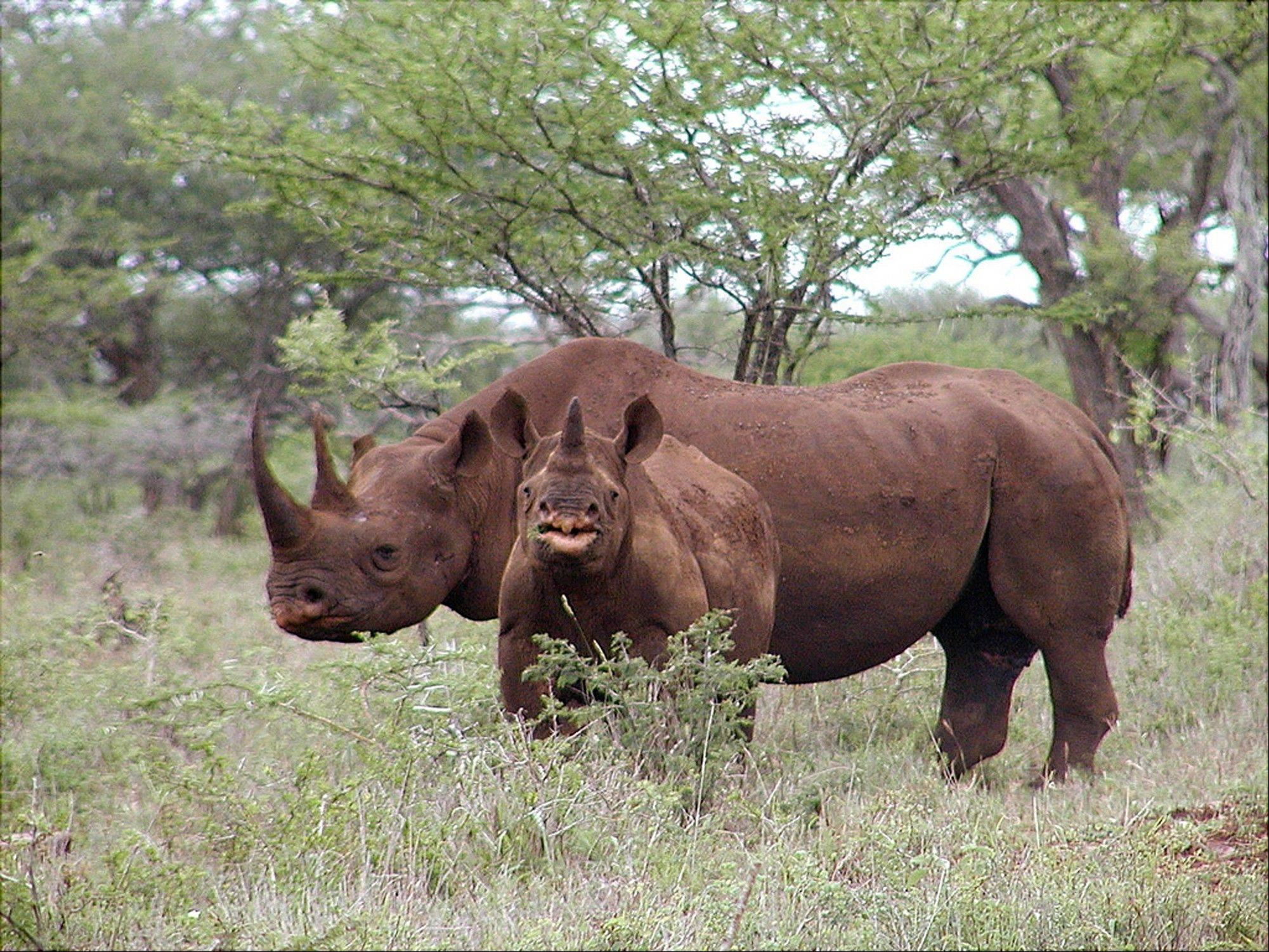The organizer of a Texas hunting club's planned auction of a permit that will allow a hunter to bag an endangered black rhino in Africa is hoping it raises up to $1 million for rhino preservation.