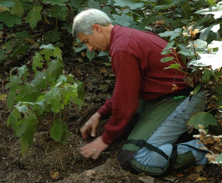 The best time to plant or transplant trees and shrubs is the fall.