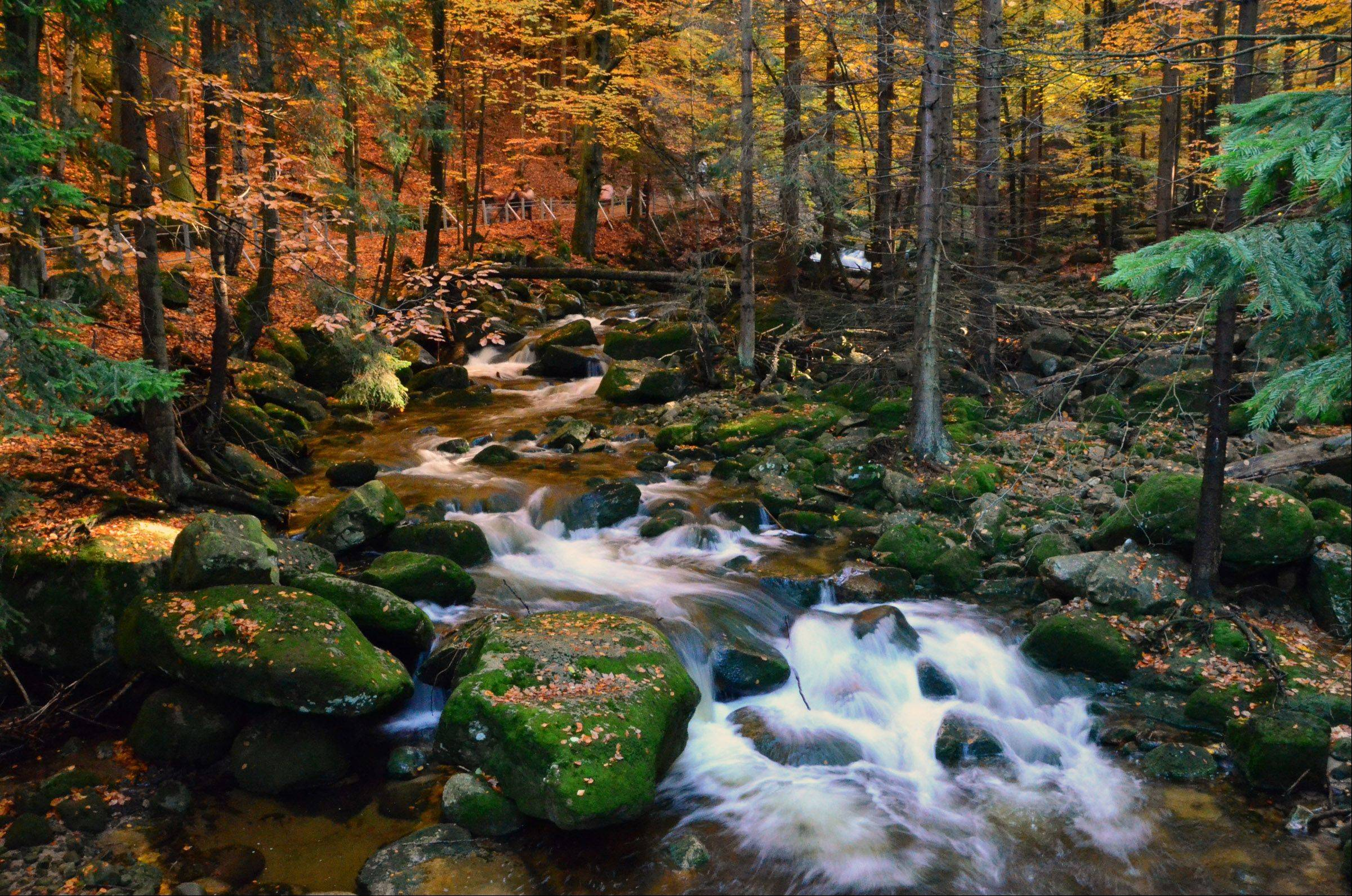 Water flows along a river at the Karkonowski National Park in Poland last week.