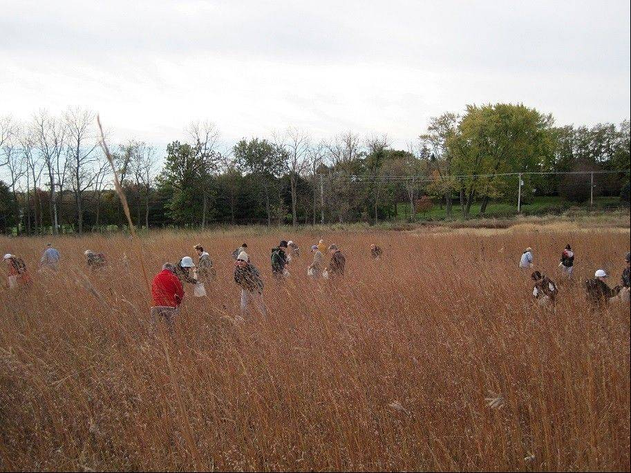 Citizens for Conservation volunteers gather native plant seed at Grigsby Prairie on Make A Difference Day.
