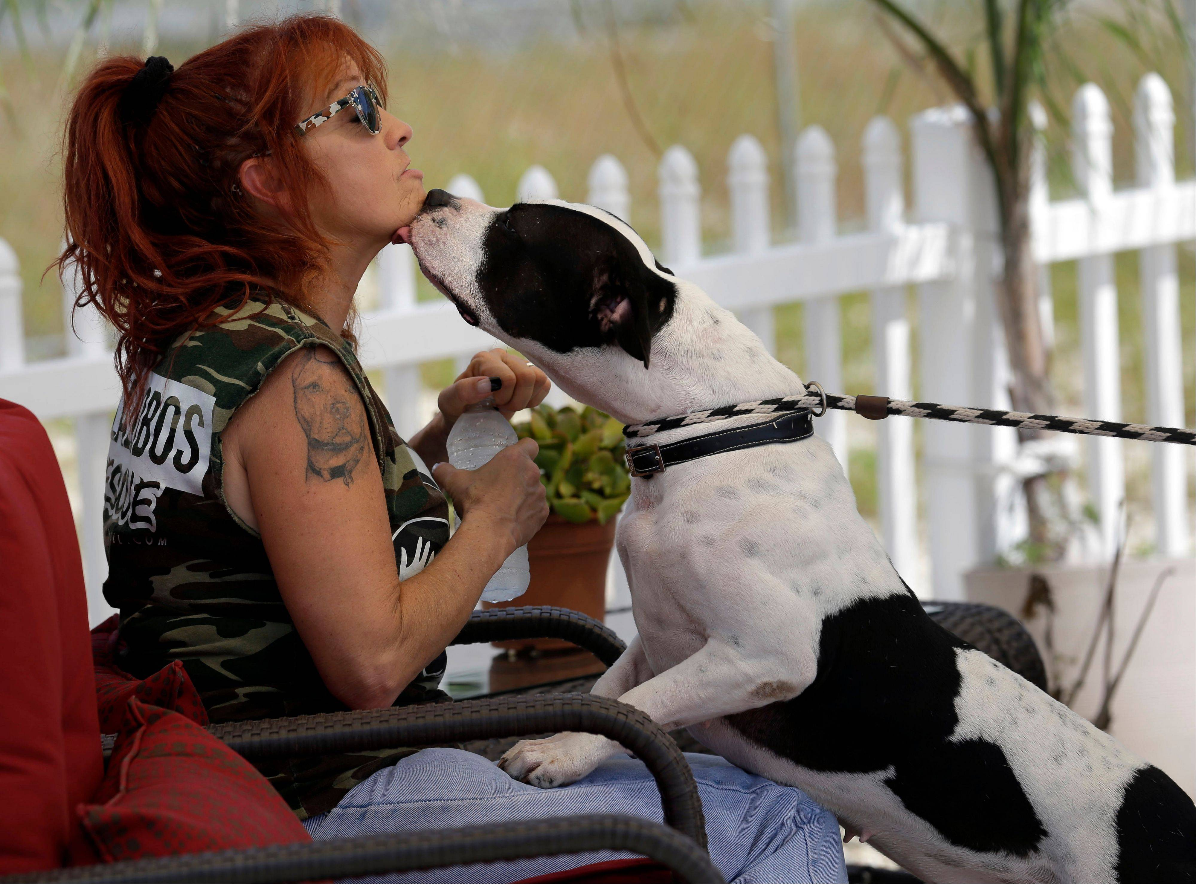 "Tia Maria Torres, who runs the nation's largest pit bull rescue center and has long paired abused and abandoned dogs with the parolees who care for them, has moved her long-running reality TV series, ""Pit Bulls and Parolees,"" from Southern California to New Orleans."