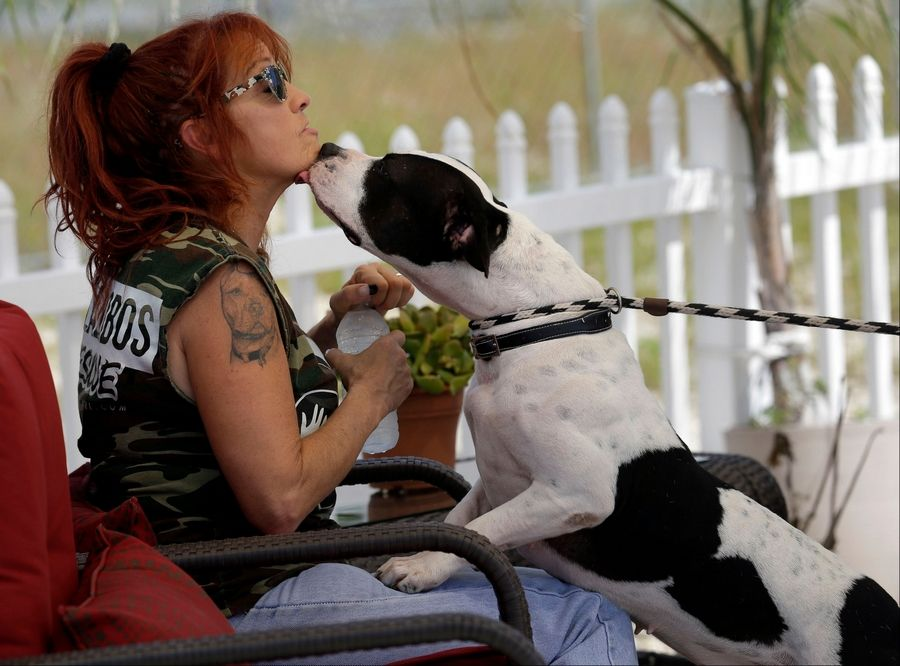 pitbulls and parolees new frontiers