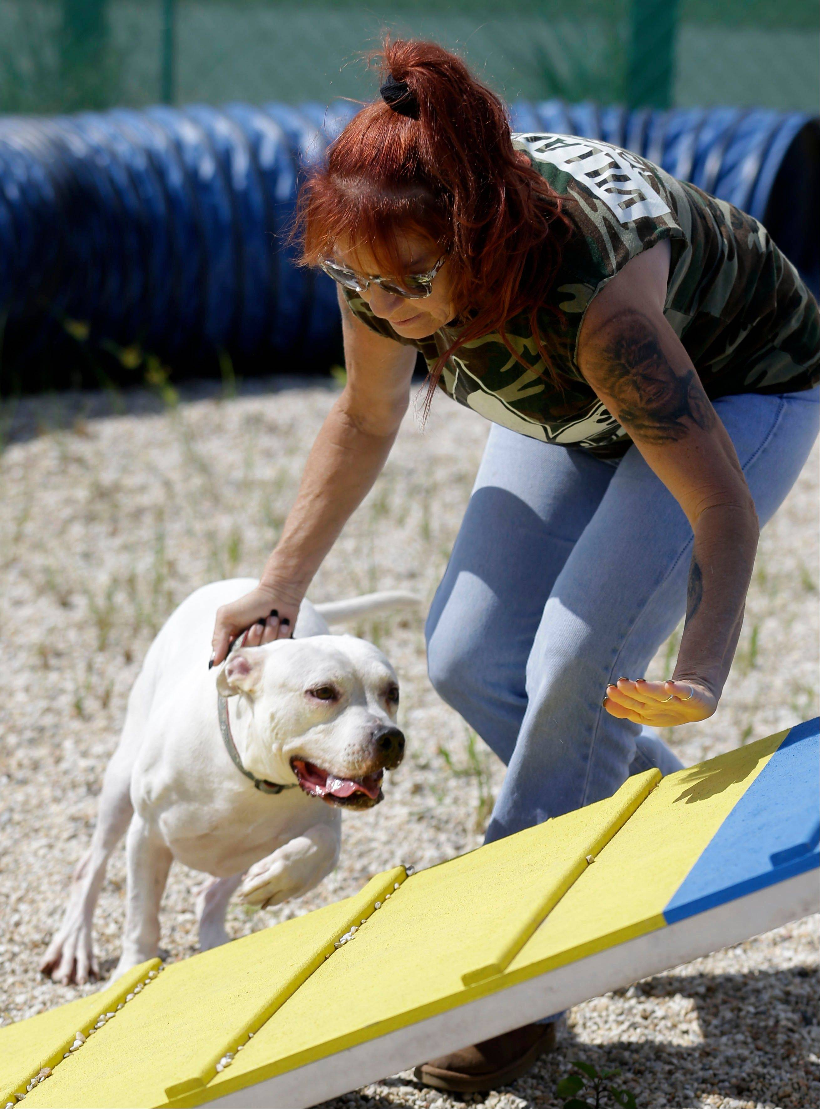 "Tia Maria Torres works with a pit bull during the filming of Animal Planet's ""Pit Bulls and Parolees"" in New Orleans."