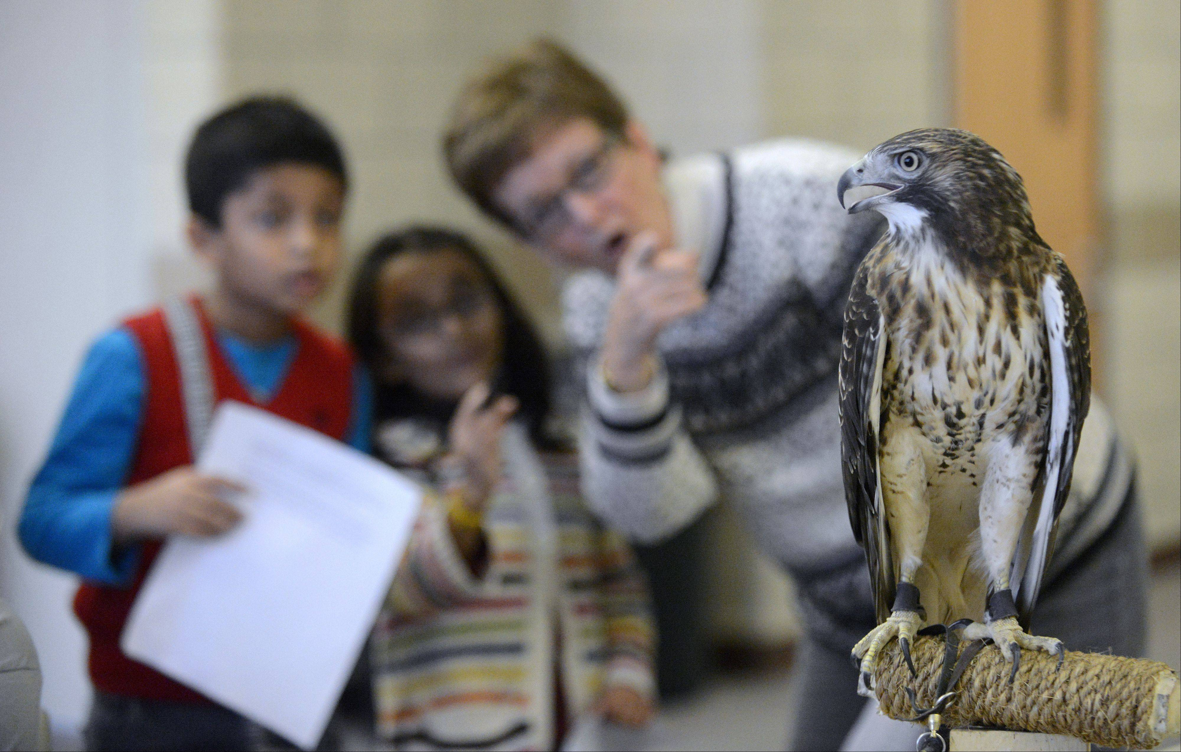 "Shrey Dshpande, 7, Anagha Chandrashek, 6, and Lynn Handler, all of Elburn, point and gasp at a red-tailed hawk named Zihna at the second annual ""Wild About Wildlife"" fundraiser on Saturday for the Fox Valley Wildlife Center at Hickory Knolls Discovery Center in St. Charles."