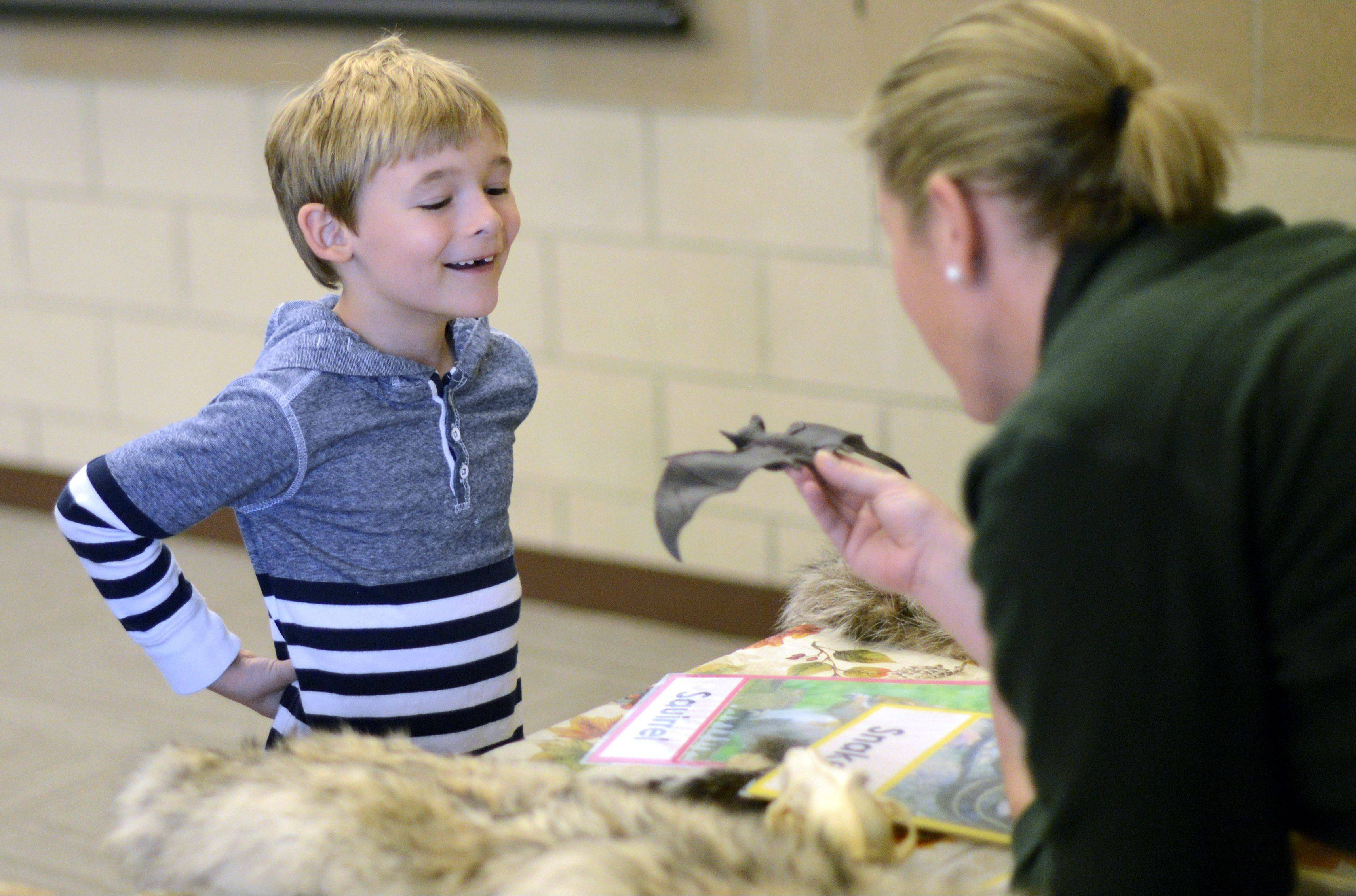 "Dante Chimenti, 7, of Sugar Grove learns about bats from Red Oak Nature Center naturalist Renee Oakley at the second annual ""Wild About Wildlife"" fundraiser for the Fox Valley Wildlife Center on Saturday at Hickory Knolls Discovery Center in St. Charles. The fundraiser is to help raise money for the center's operations and to buy land for a new center."