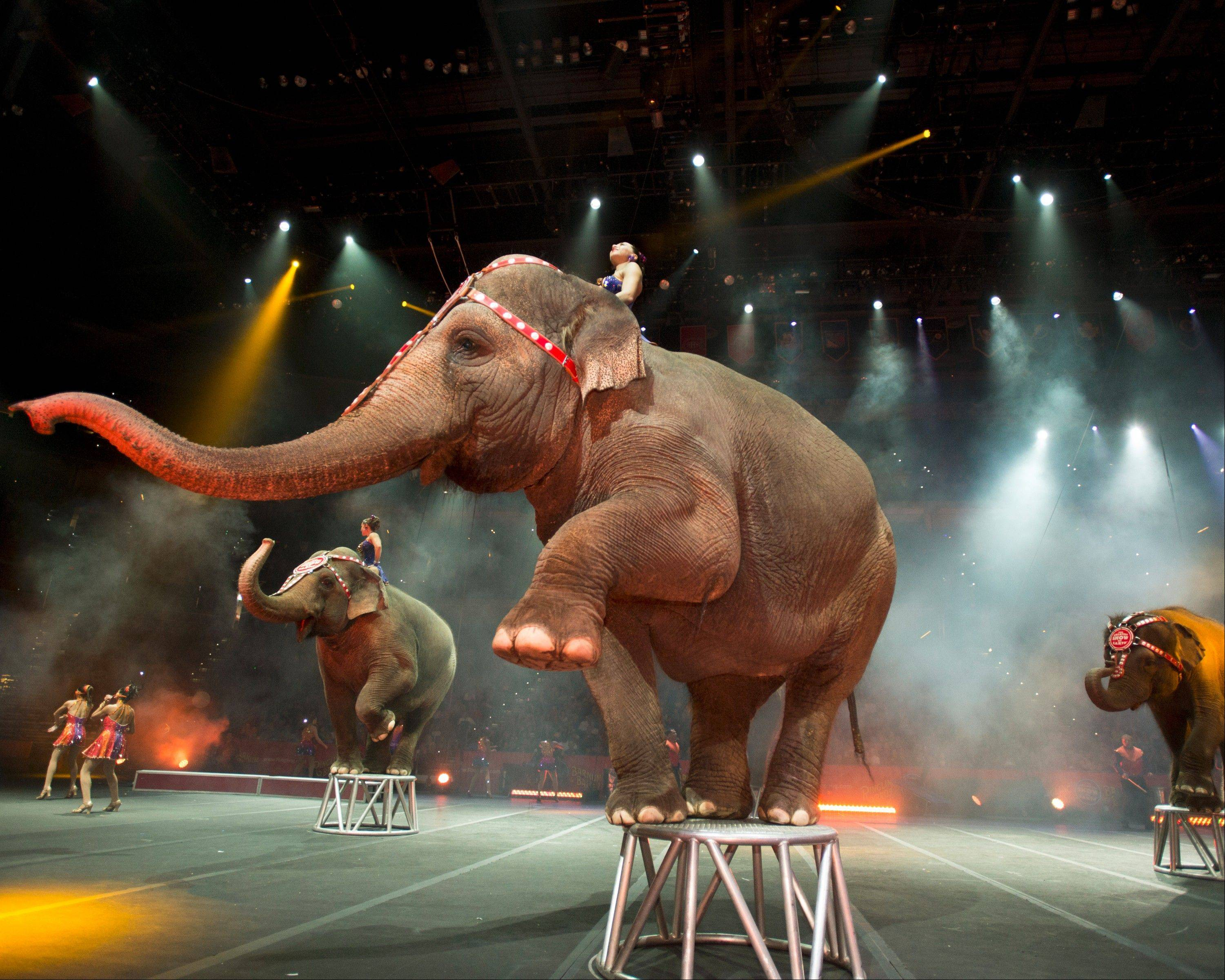 "Elephants appear in Ringling Bros. and Barnum & Bailey Circus show ""Built to Amaze!"" at the Allstate Arena in Rosemont and the United Center in Chicago."
