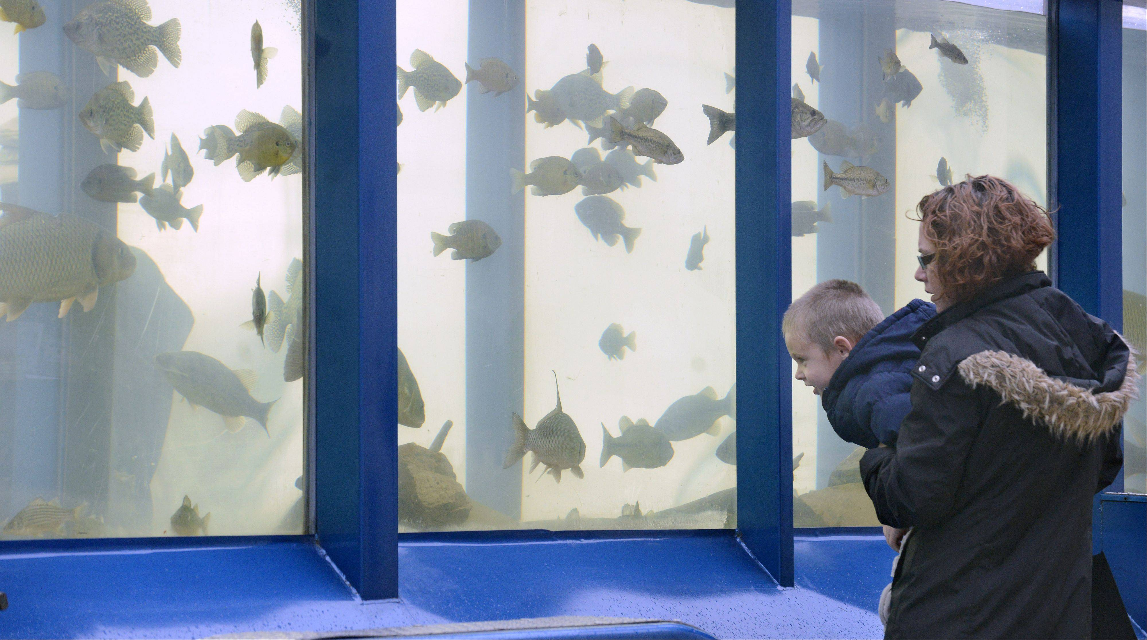 Shannon Hanson, of Wauconda, gives her son, Grady, 4, a boost to look at fish from the Fox River on display in a 2,500 gallon tank at the Friends of the Fox River's booth at the sixth annual Green Living Expo at McHenry County College in Crystal Lake on Saturday. Hanson came with her mother, Ellen Hanson of Crystal Lake, to the event for the first time. They thought Grady would enjoy seeing the massive tank.