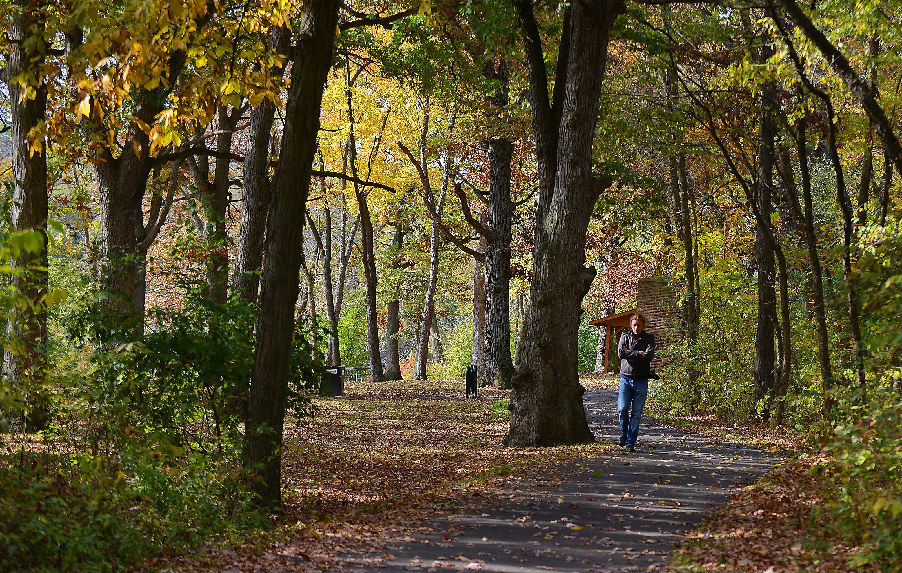 Ra Dymny of St. Charles, camera in tow, takes in the fall colors during a walk through the Jon J. Duerr Forest Preserve in South Elgin Monday.