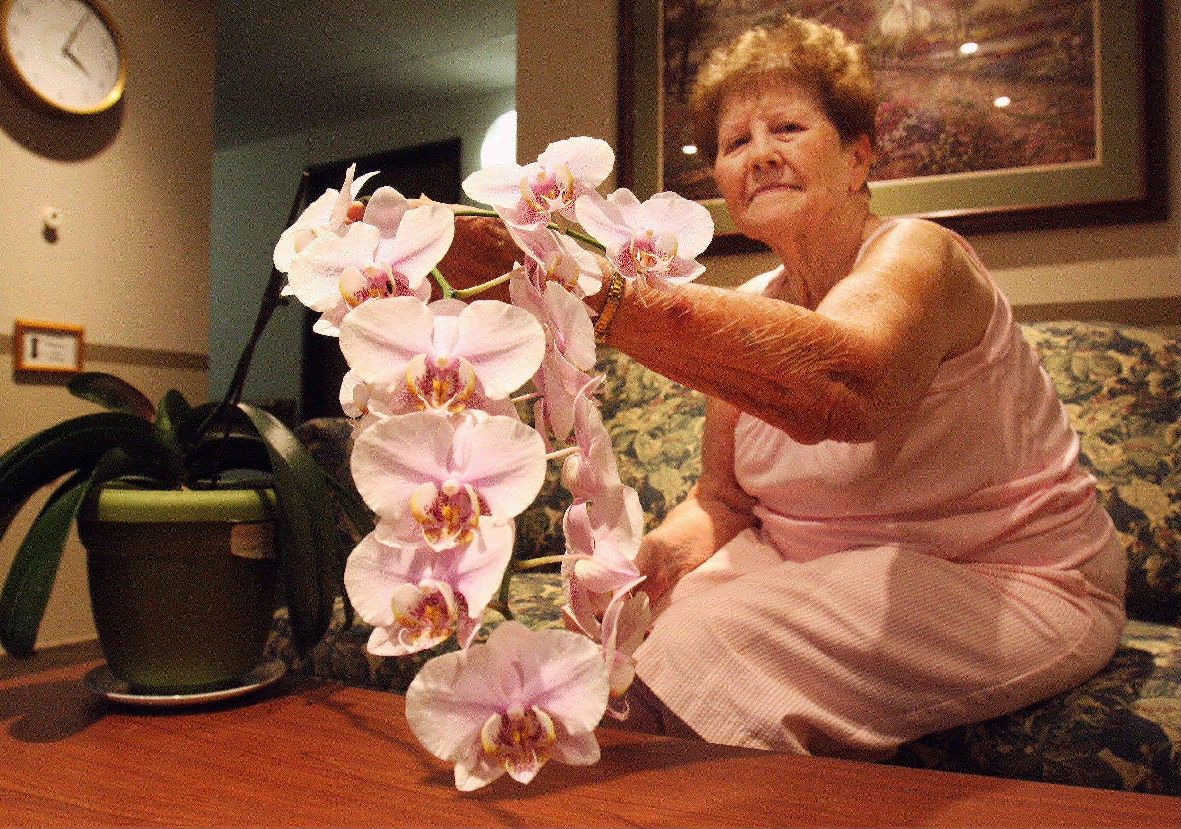 June Runte, 91, holds up her blooming orchid plant at her home in Freeport.