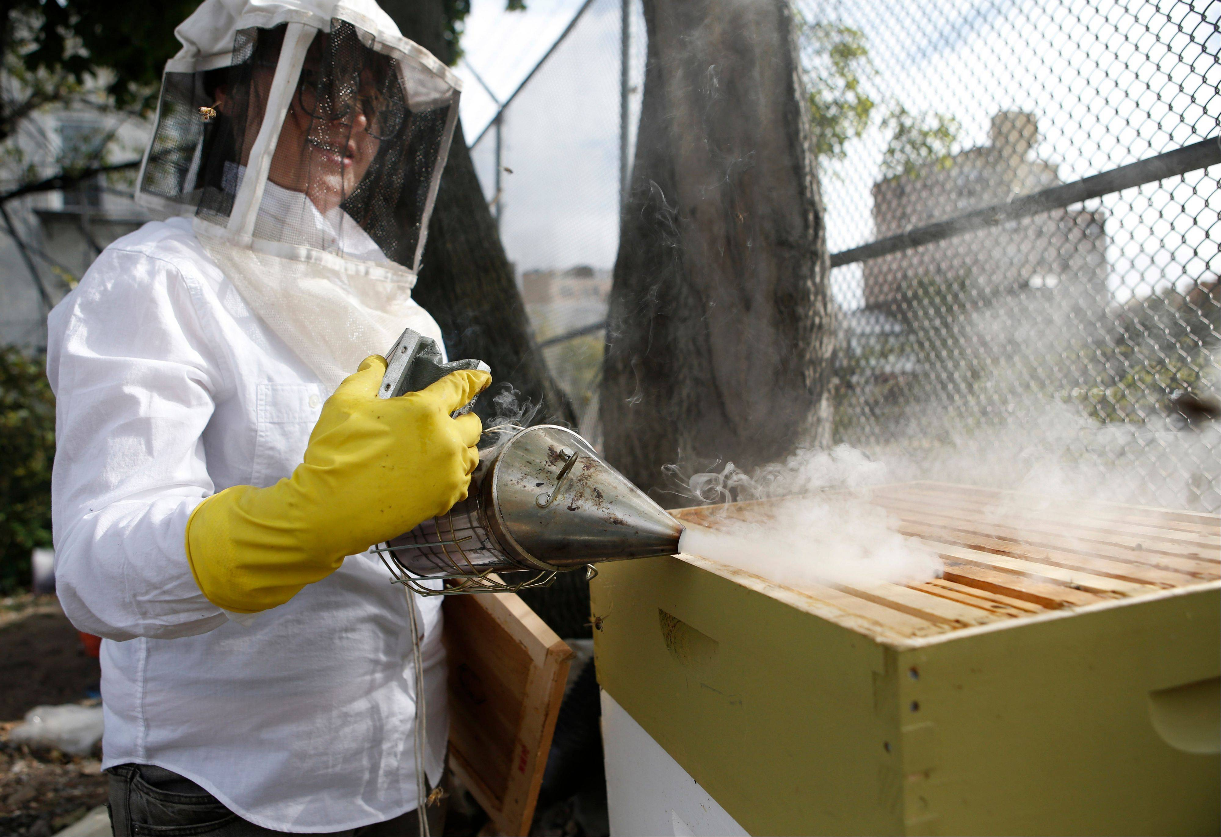Beekeeper Kellen Henry uses a smoker to calm the bees while conducting a hive inspection.