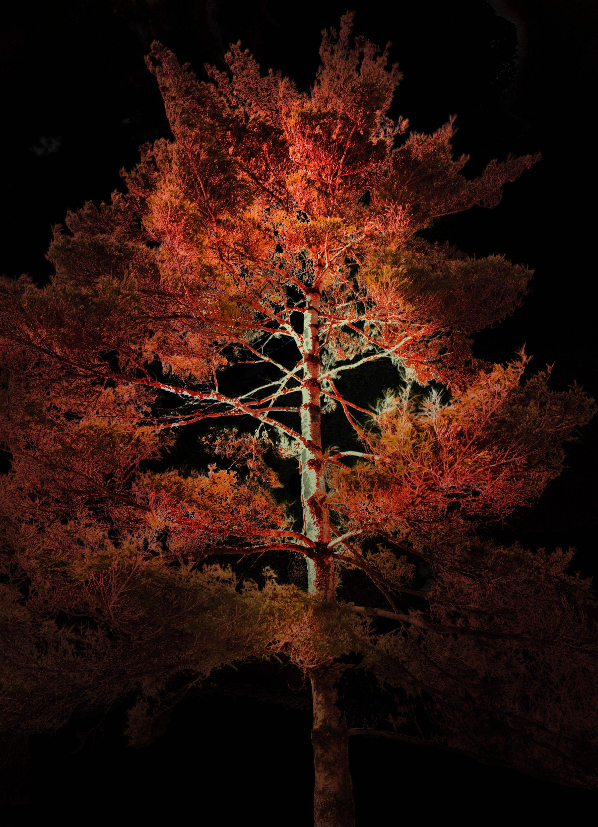 "Morton Arboretum's new ""Illumination"" uses state-of-the art technology to create experiences such as singing to trees to make them change color."
