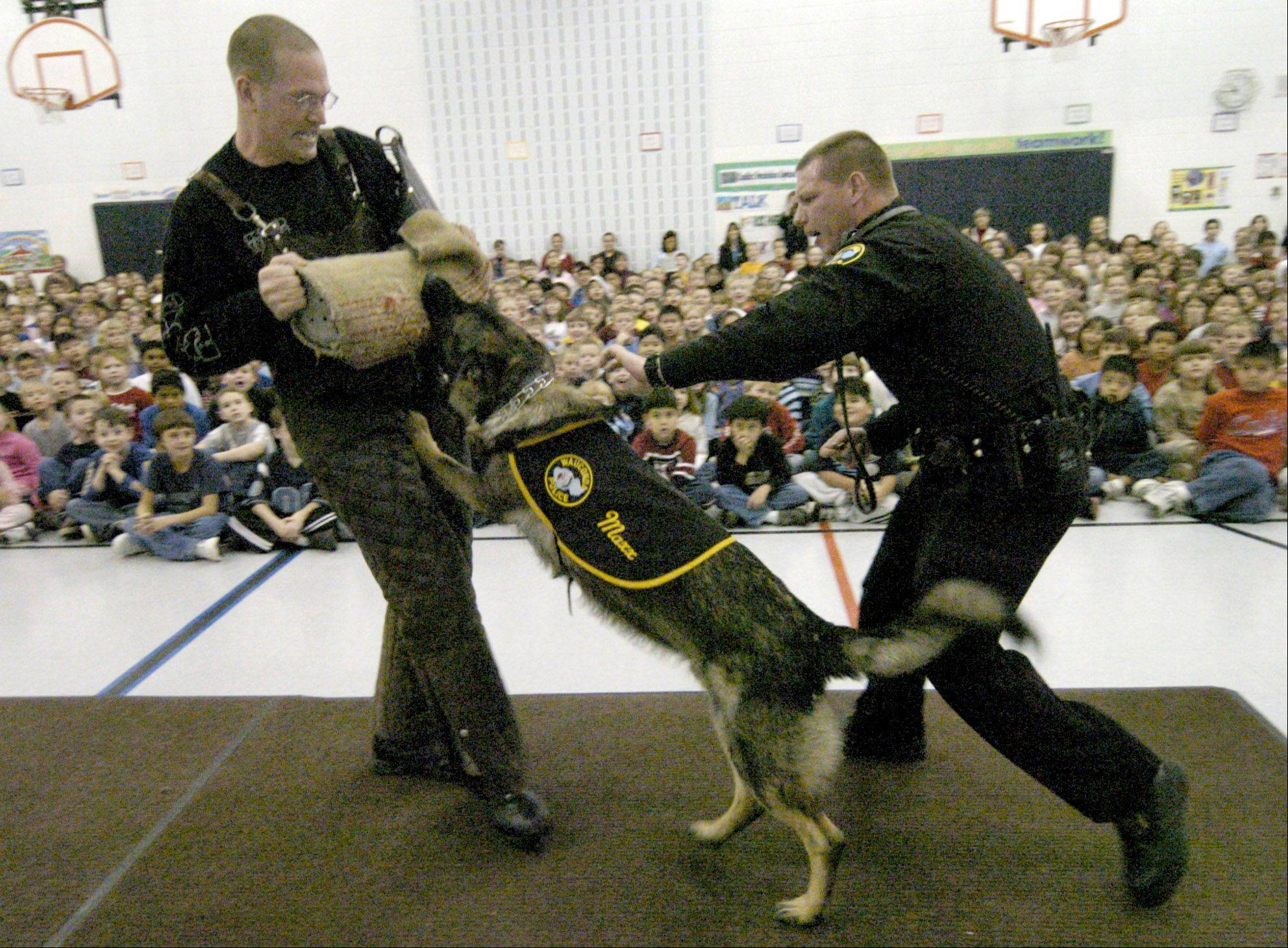 Wauconda's police dog, Maxx, is retiring in 2014. Here he gives a demonstration at a local school with his partner, Sgt. John Combs.