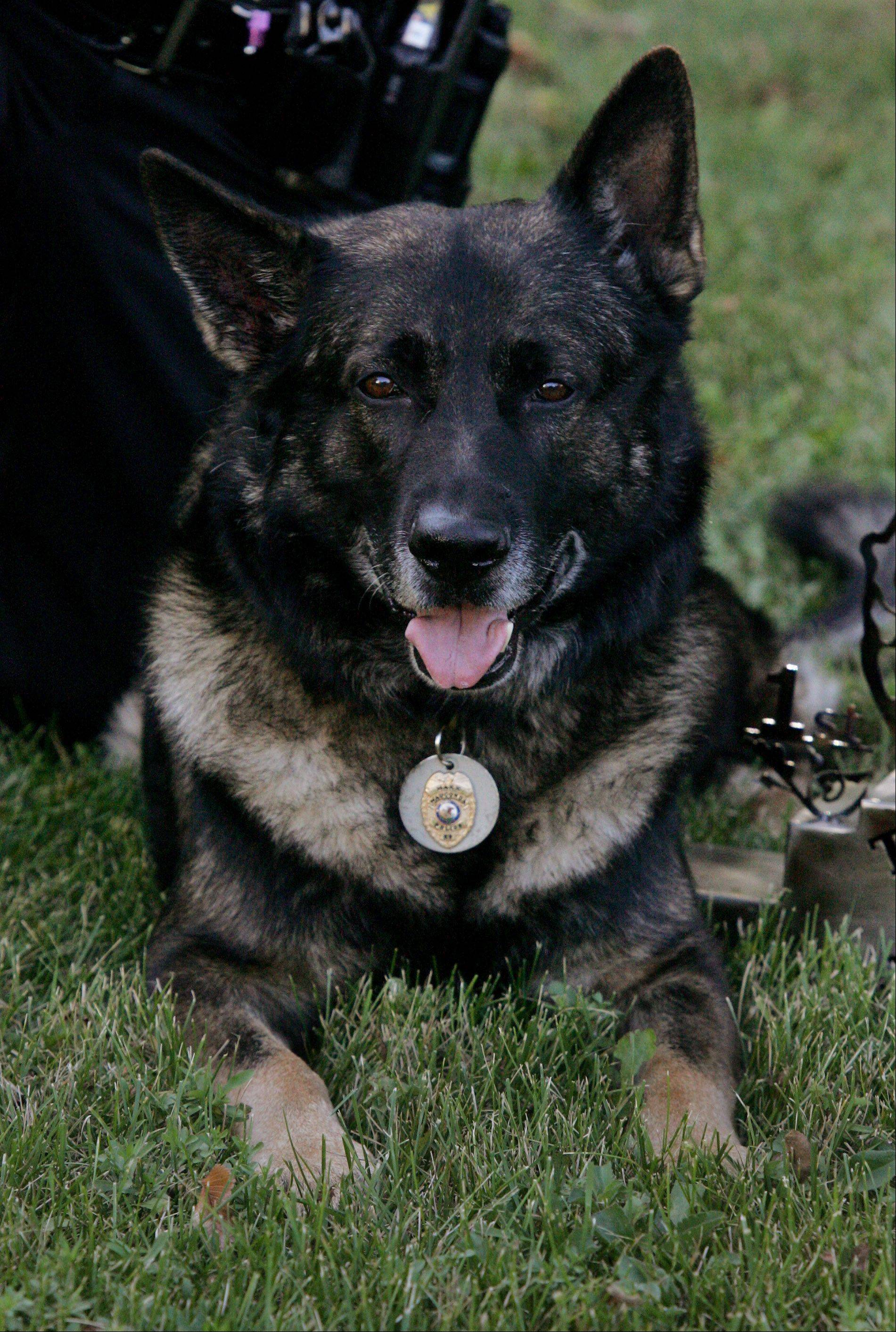 Maxx is the canine partner of Wauconda police Sgt. John Combs.