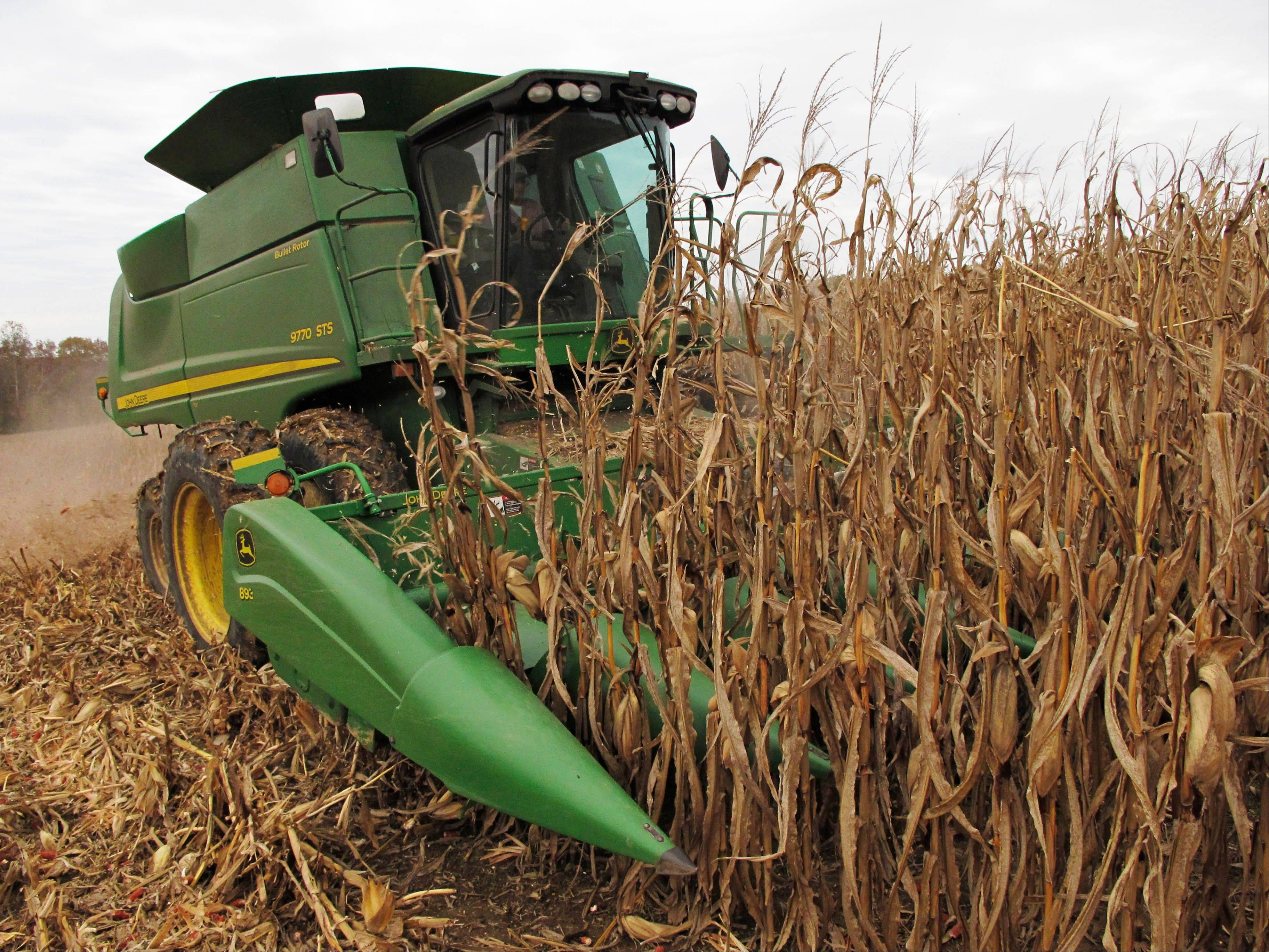 Bill Bass, 63, harvests corn Tuesday on acreage near the southern Illinois town of Cobden.
