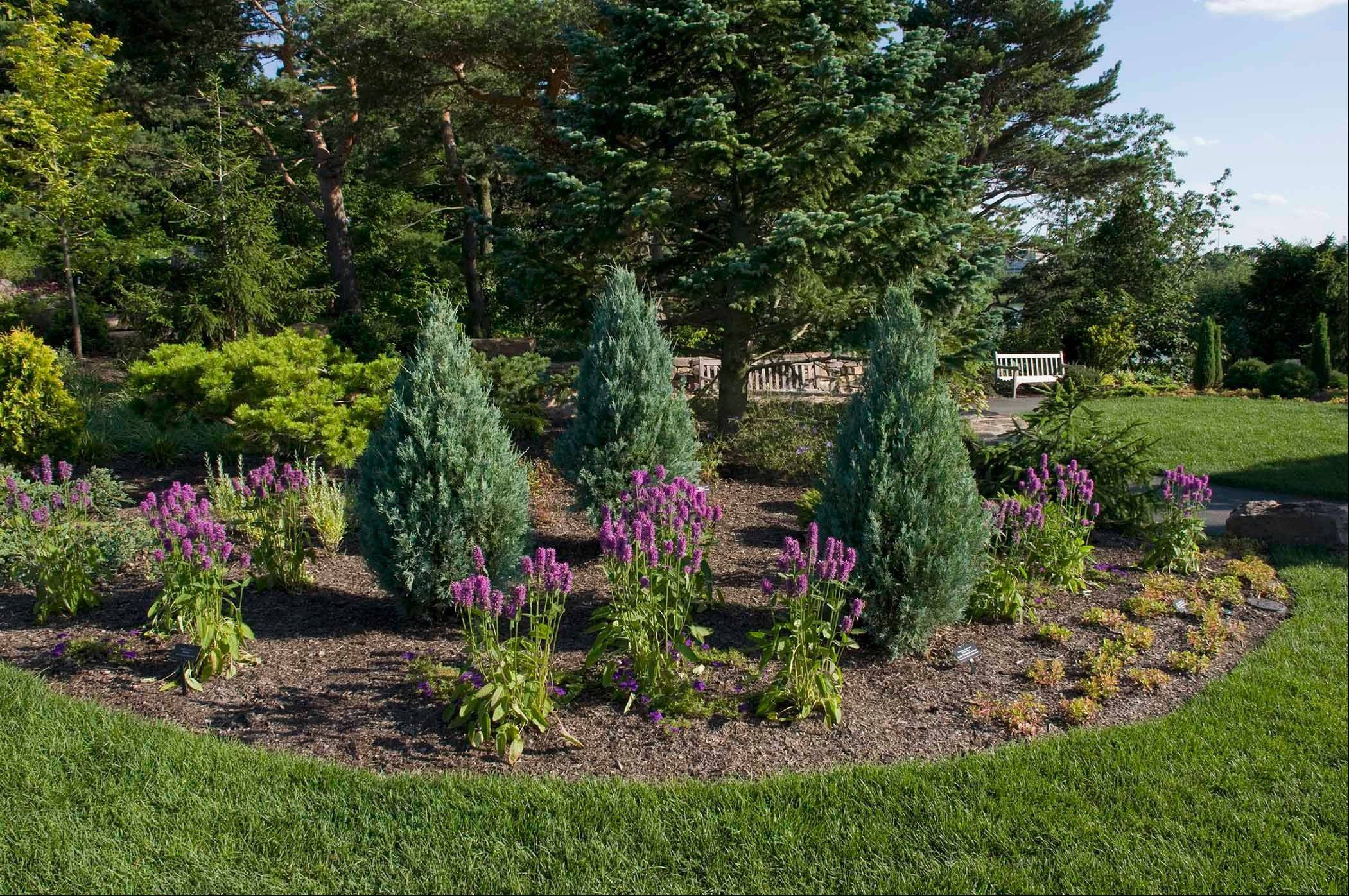 Thoroughly water evergreens planted in the last three years so they will not lose too much moisture in freezing temperatures.