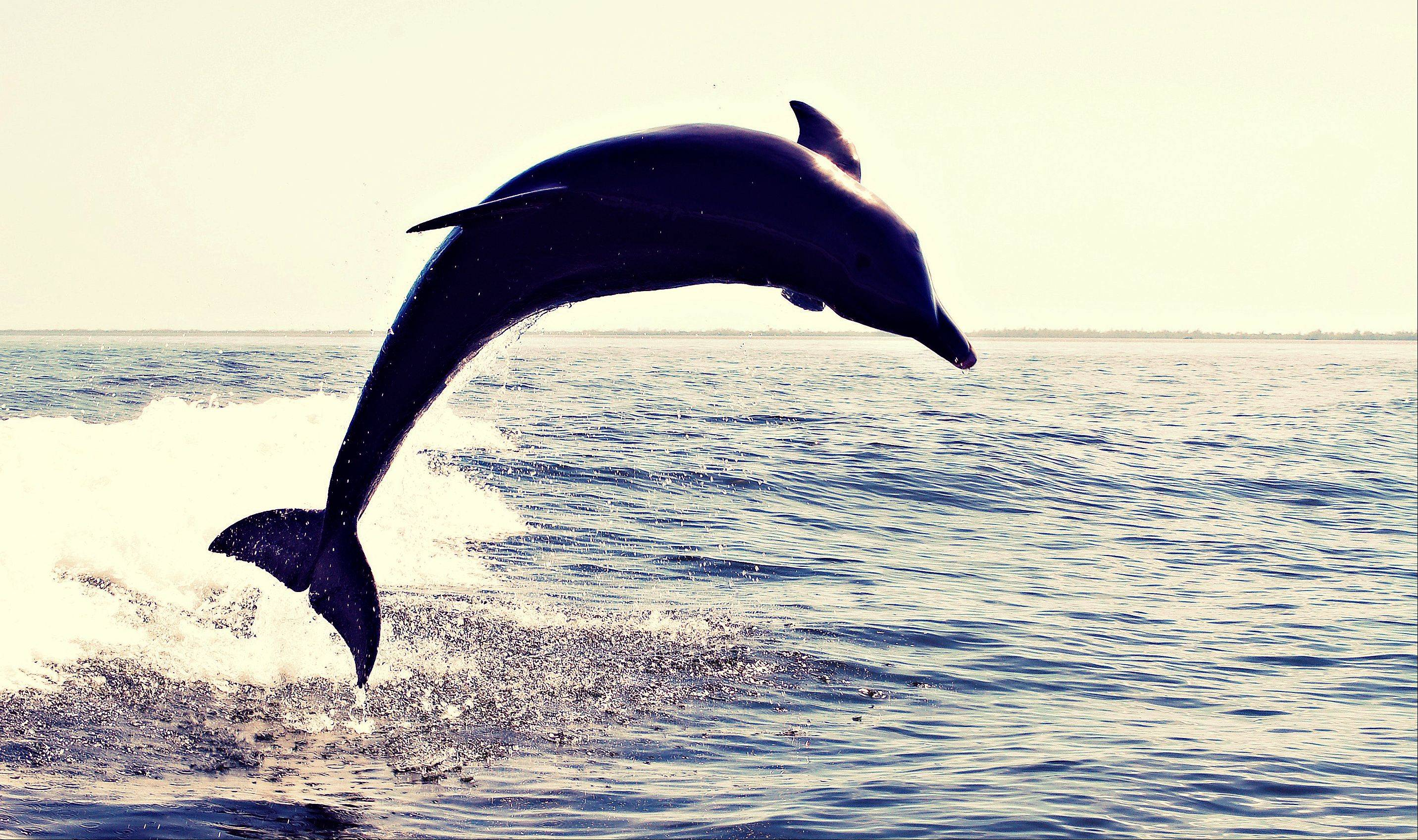 A dolphin in Sanibel, FL being playful for the camera.