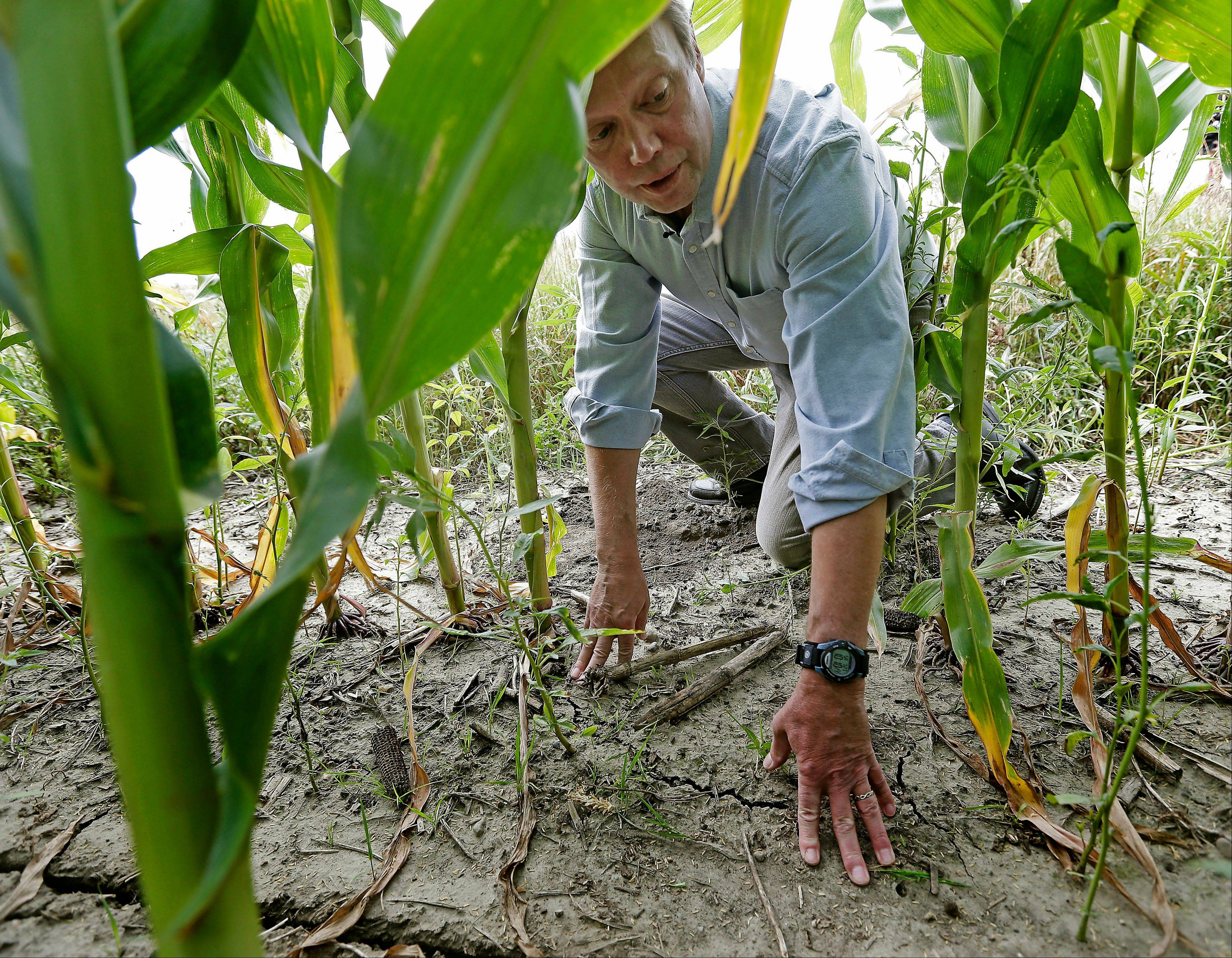 Environmentalist Craig Cox looks at a corn field near Ames, Iowa. The government's predictions of ethanol's benefits have proven so inaccurate that independent scientists question whether it will ever achieve its sole environmental goal: reducing greenhouse gases.