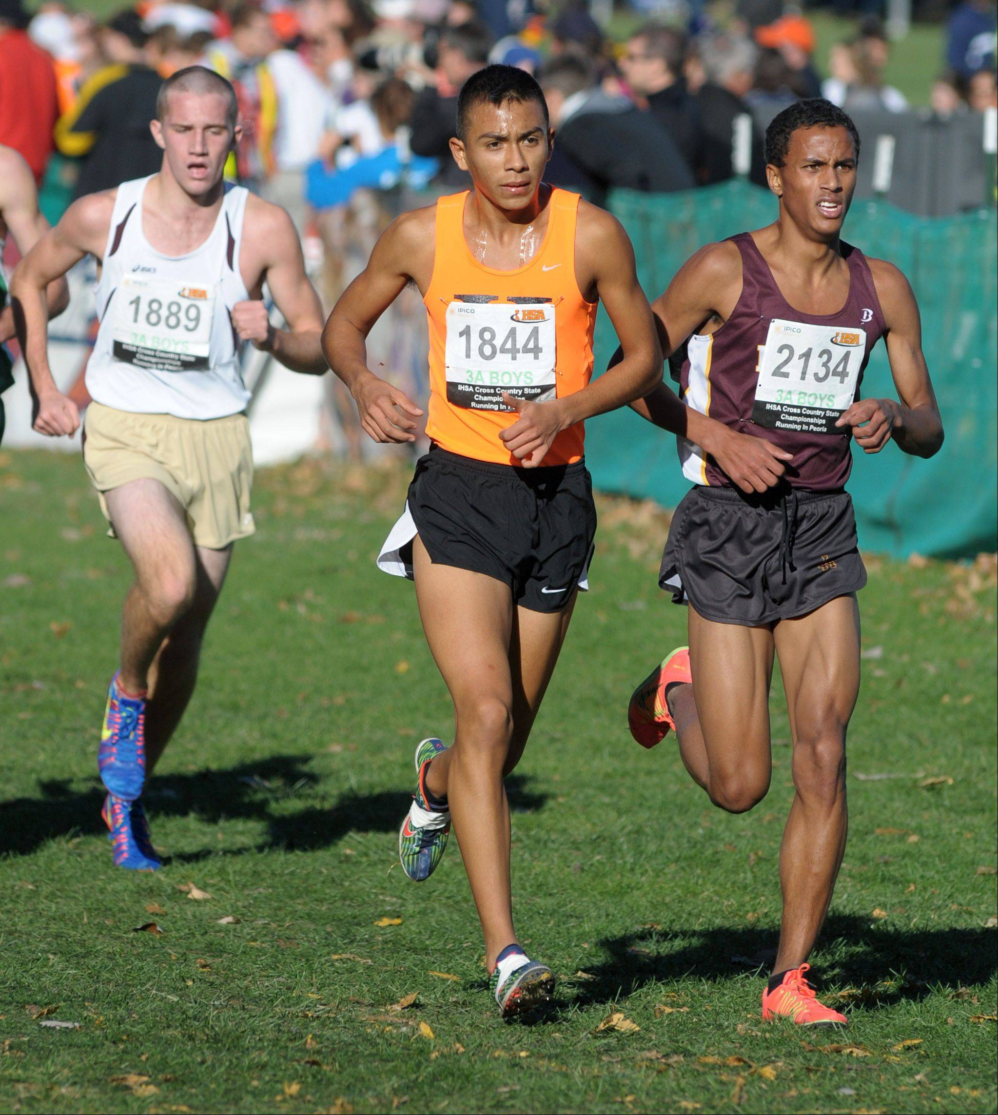 Hersey's David Rodriguez (1844) takes 18th place in the Class 3A IHSA cross country state final at Detweiller Park in Peoria on Saturday, November 9.