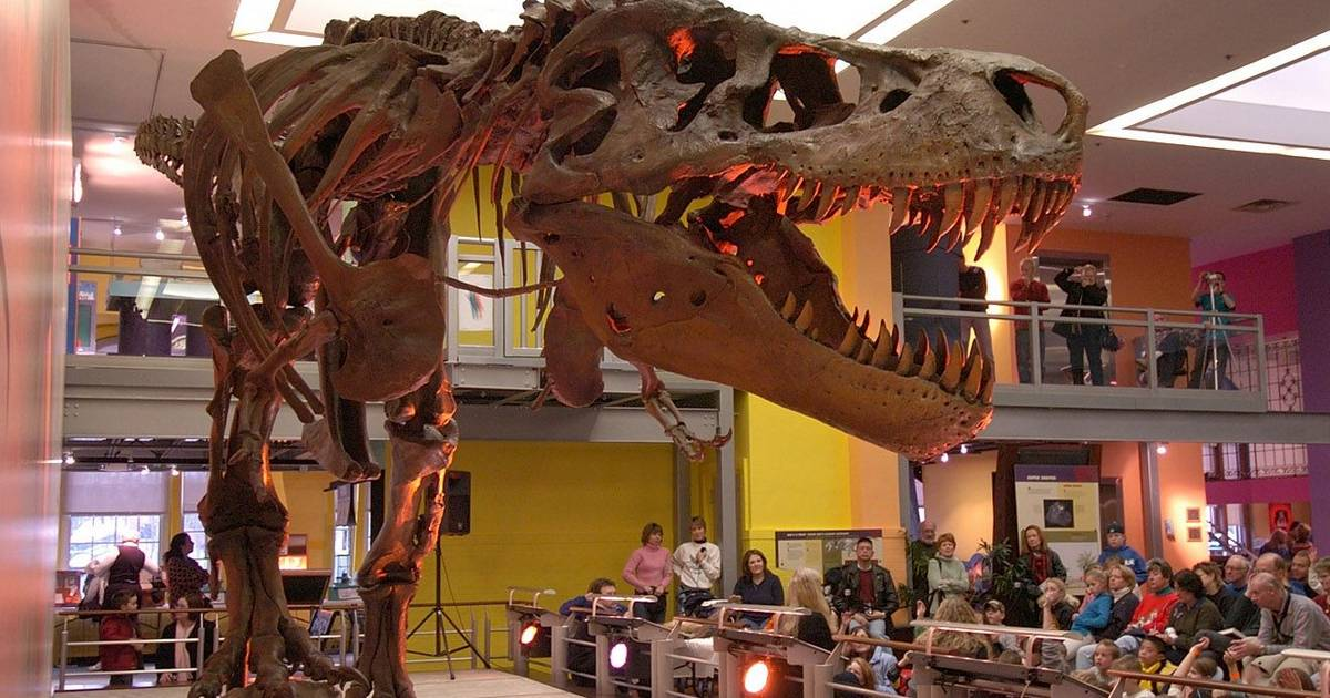 Chicago Field Museum 39 S Dinosaur To Get Cleaning