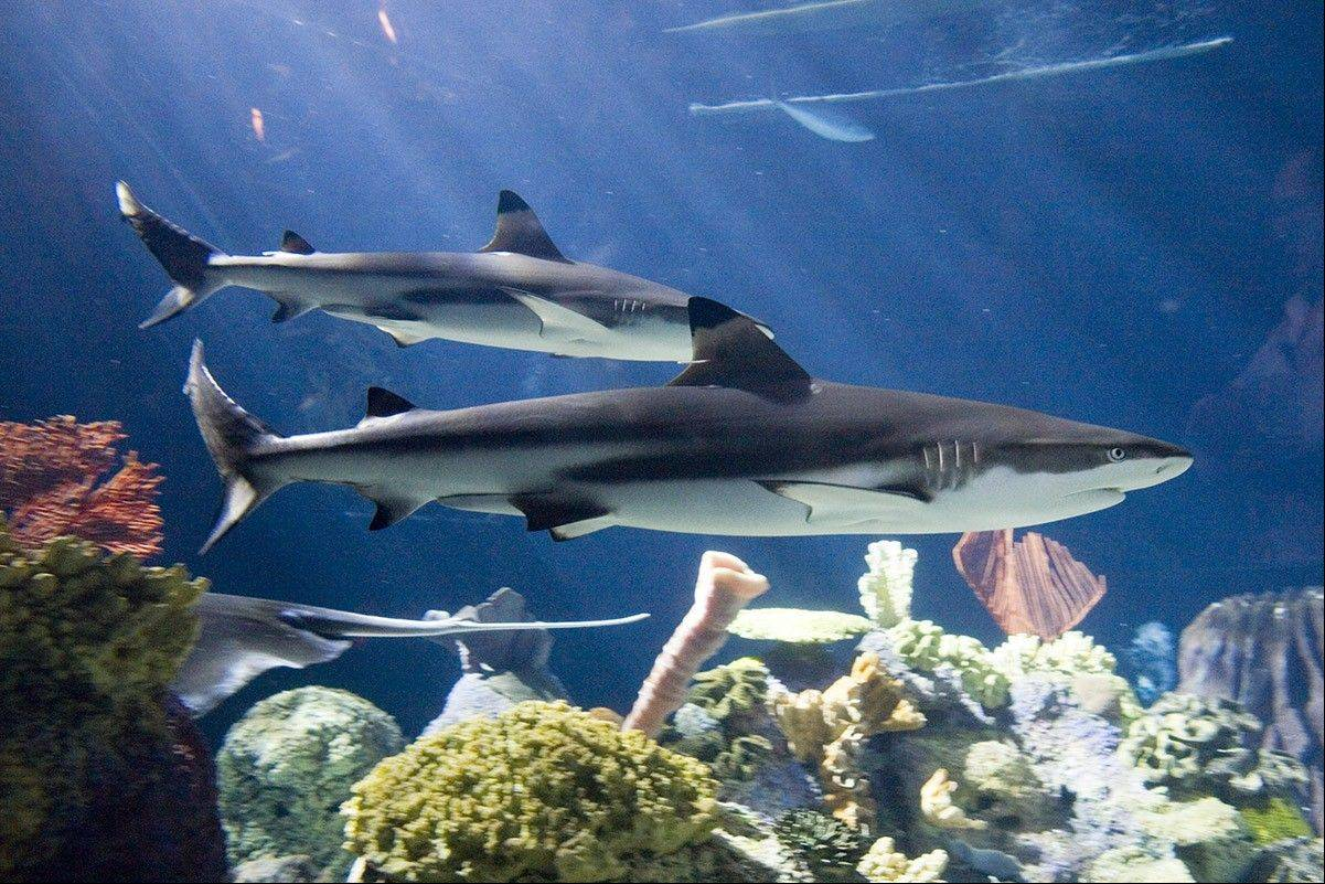 Product description With our Sharks TOOB you don t have to visit the ocean to meet the sleekest and most terrifying swimmers alive today Safari Ltd TOOBS are