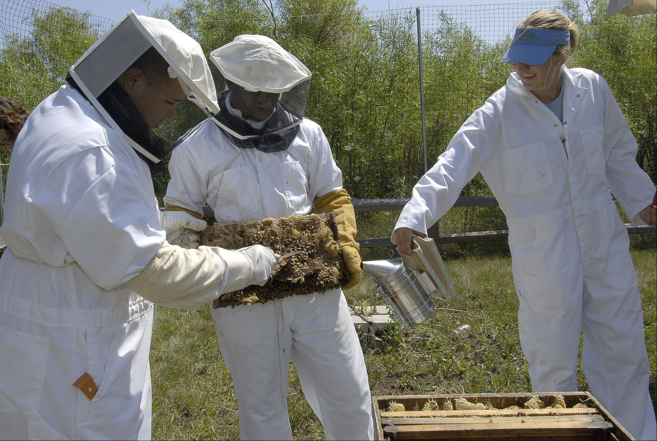 Beekeepers Ivan Acosta (L), Khalil Harris and intern Lynne Haynor tend to the bees at open house at the Green Youth Farm in the Greenbelt Forest Preserve in North Chicago.