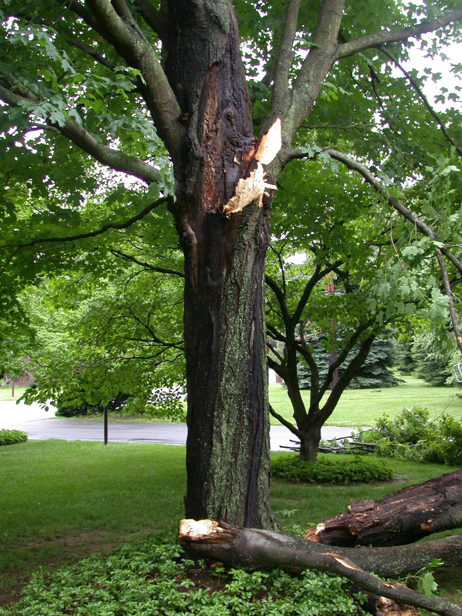 Avoid breaks like these with the tree care tips from Davey Tree arborists.