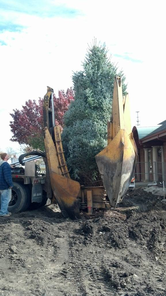 The permanent installation of a near 20' blue spruce at the Fox Community Center signals the preparations that are in full swing for West Chicago's Frosty Fest, scheduled for Saturday, December 7, 2013.