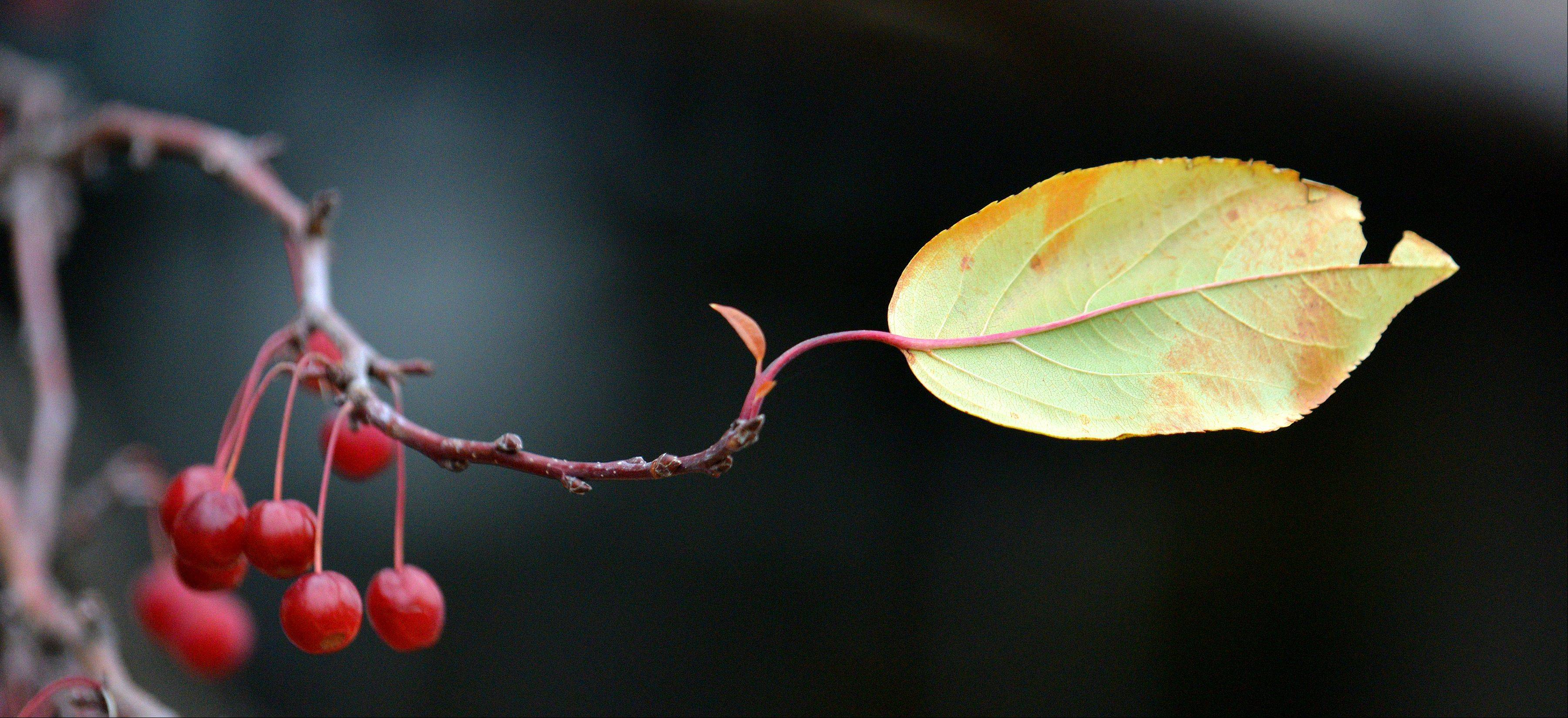 A lone leaf provides an interesting image of the changing seasons.