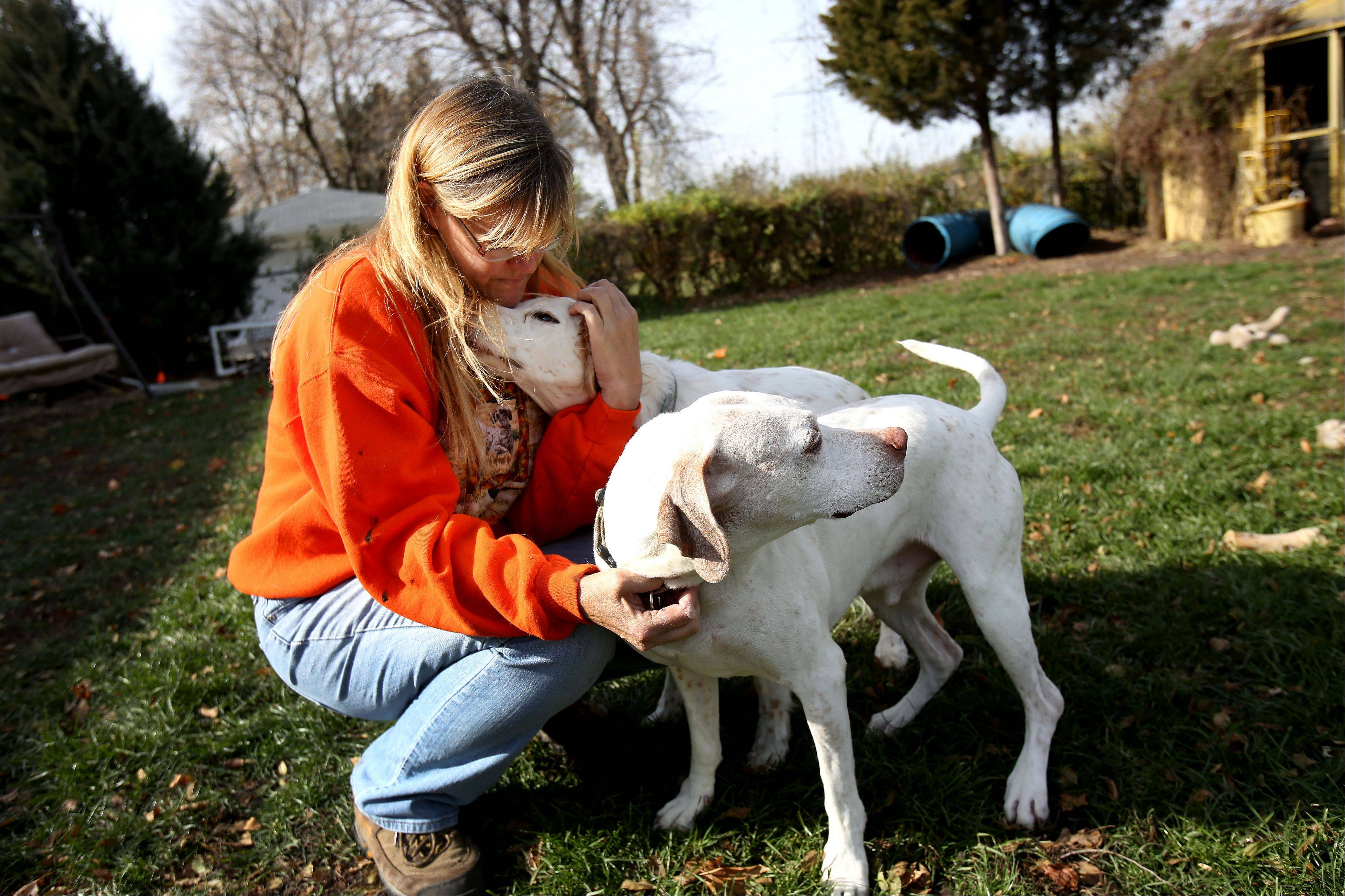 Lisa Spakowski, president of Illinois Birddog Rescue, spends time with Dantes and Lani, two of her five dogs.