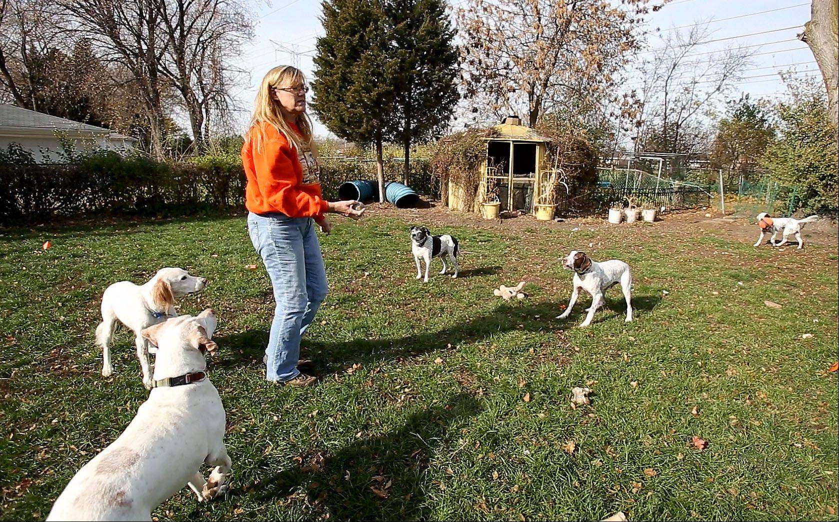 A judge is expected to decide next week whether Lisa Spakowski violated Wood Dale law by keeping more than three dogs at her home.