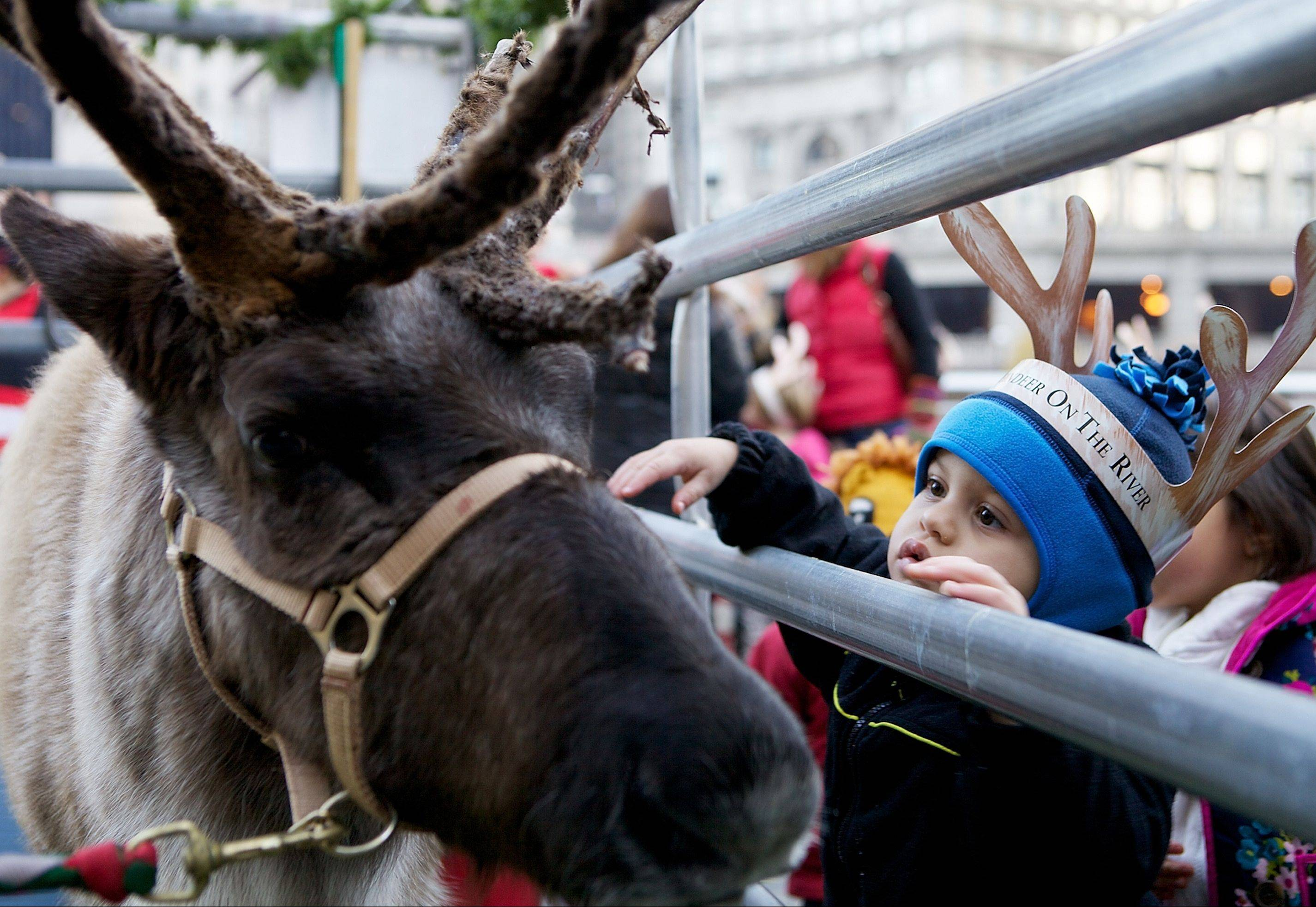 Meet, greet and take pictures with Reindeer on the River at Trump Chicago, Nov. 23.