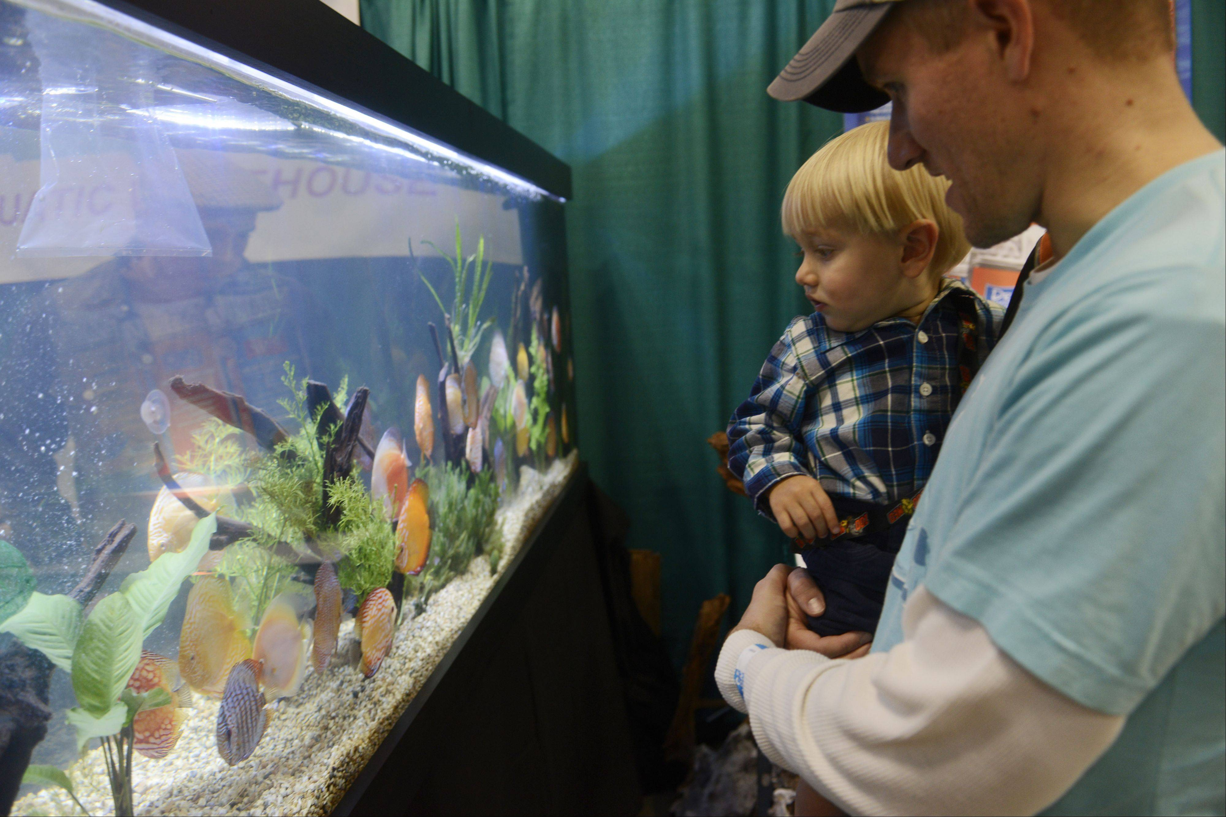 Jim Nielsen of Yorkville and his son Easton, 1, view discus fish displayed by Aqua Visions Aquatic Warehouse during the Chicago Aquatic Experience Show, held at the Renaissance Schaumburg Convention Center Saturday.