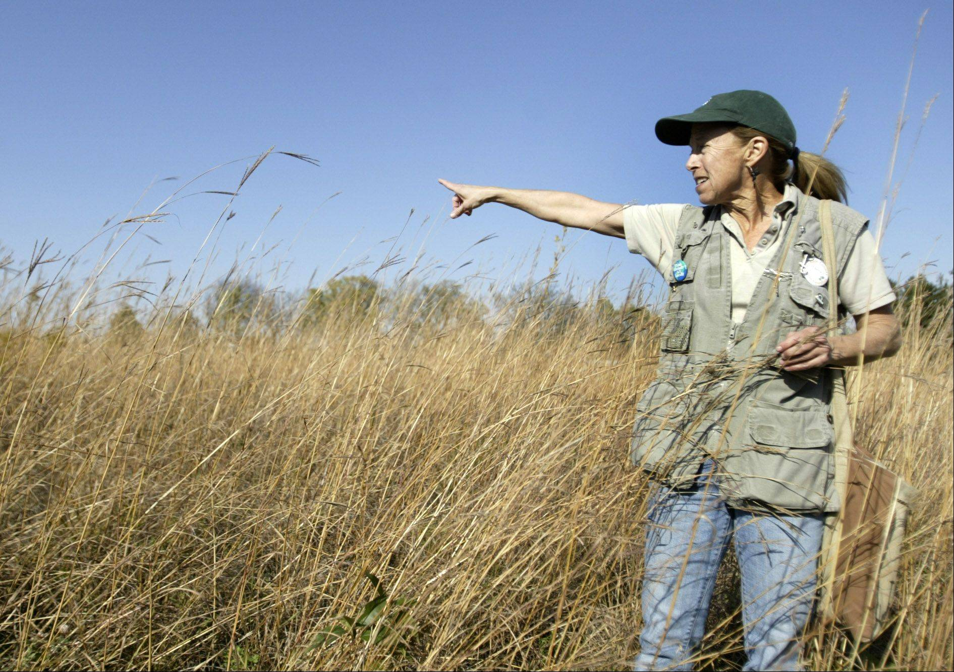 Valerie Blaine, a naturalist with the Kane County Forest Preserve District, discusses the prairie at Muirhead Springs Forest Preserve during its opening two years ago in Plato Township. Some of the land ComEd desires for its high-tension power lines includes a portion of the forest preserve.