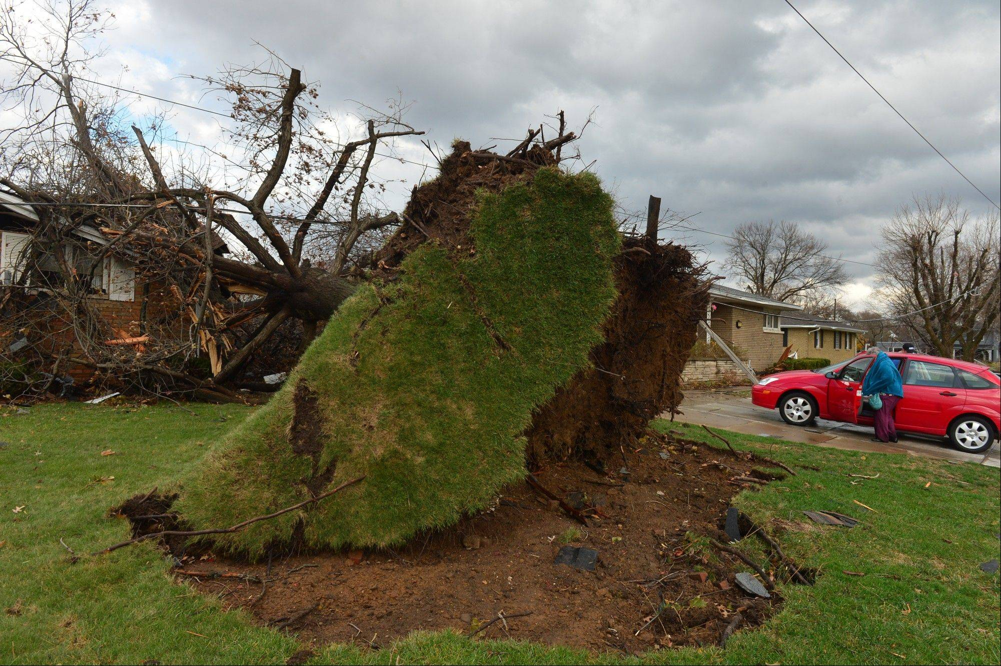 A tree was pulled out of the ground by the roots, collapsing onto a house after a tornado left a path of devastation through the north end of Pekin, Il.,Sunday, Nov. 17, 2013. Intense thunderstorms and tornadoes swept across the Midwest on Sunday, causing extensive damage in several central Illinois communities while sending people to their basements for shelter.