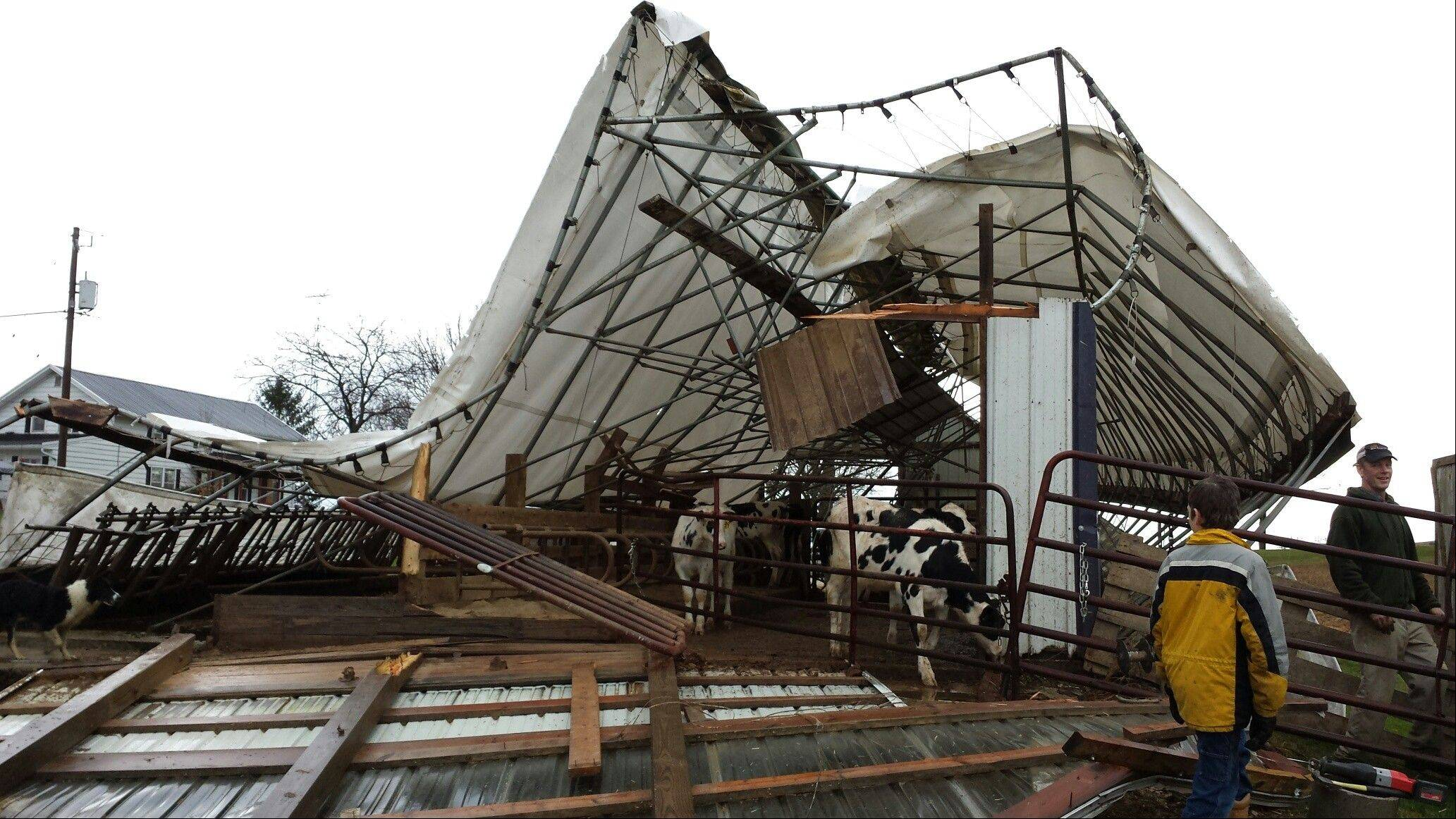 This photo provided by Dodge County Emergency Management shows cattle shed on a family farm in the Town of Hustisford was damaged Sunday, Nov. 17, 2013 when severe weather moved through the area. Dodge County Emergency Management Director Joseph Meagher says no cattle were injured.