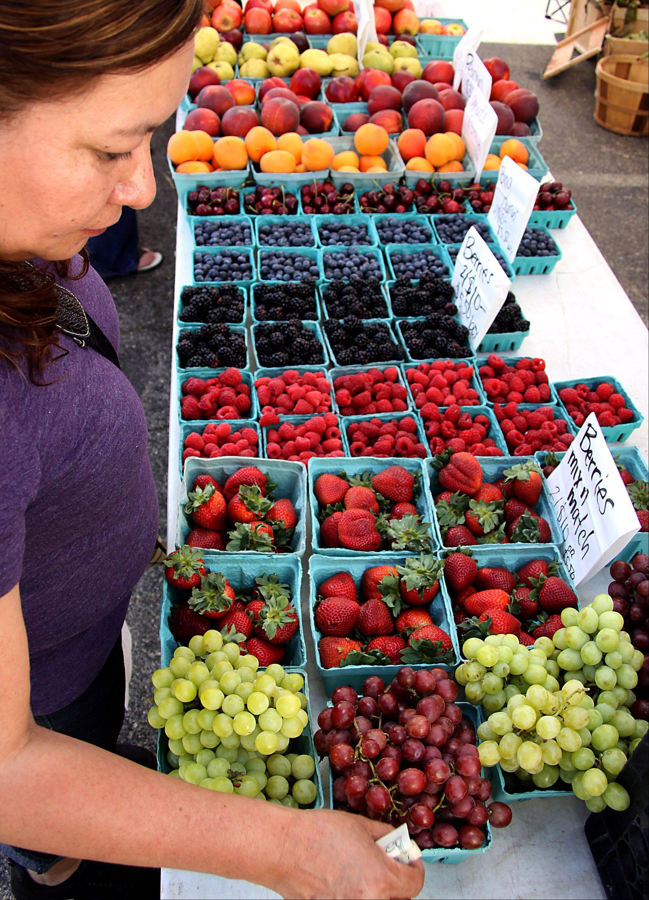 A shopper looks over berries at the Windy Acres Farm Stand booth during the Downtown Harvest Market in Elgin earlier this season. It is one of two in Kane County that accepts Link electronic benefits cards.