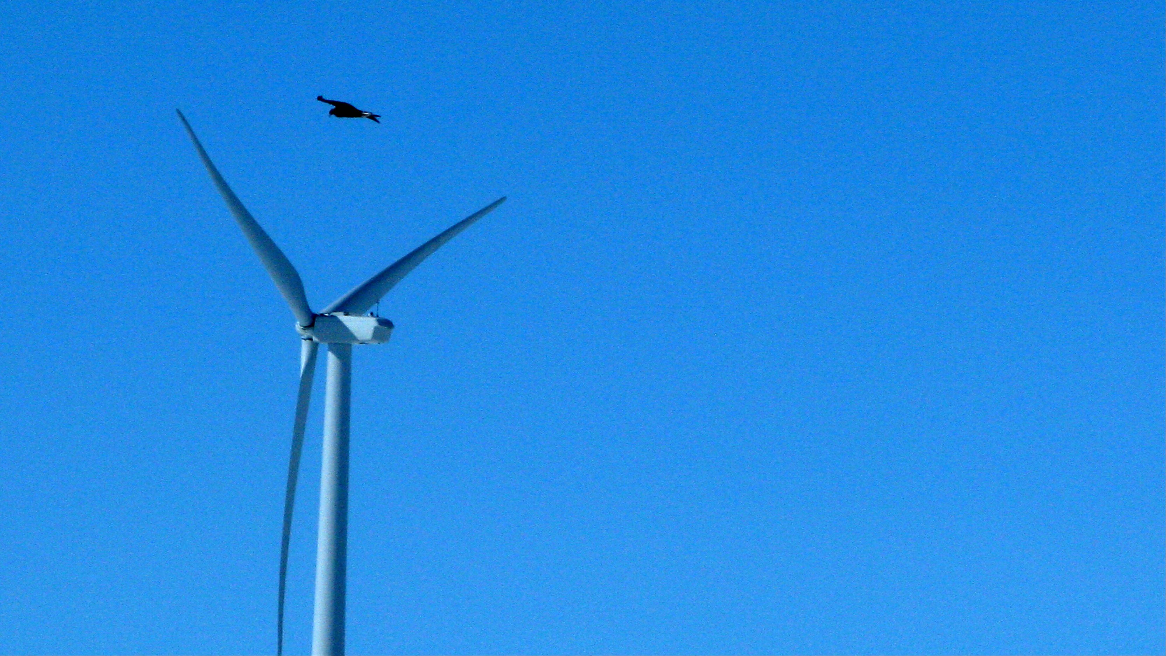 A golden eagle flies over a wind turbine on Duke energy's top of the world wind farm in Converse County Wyo.